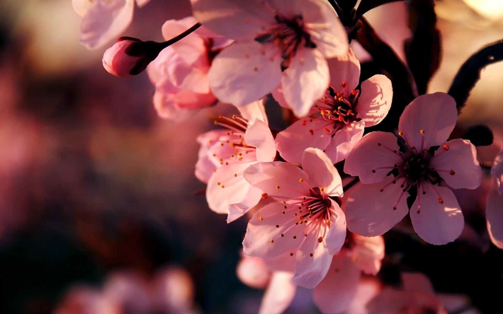 Розовые цветки во время цветения бесплатно