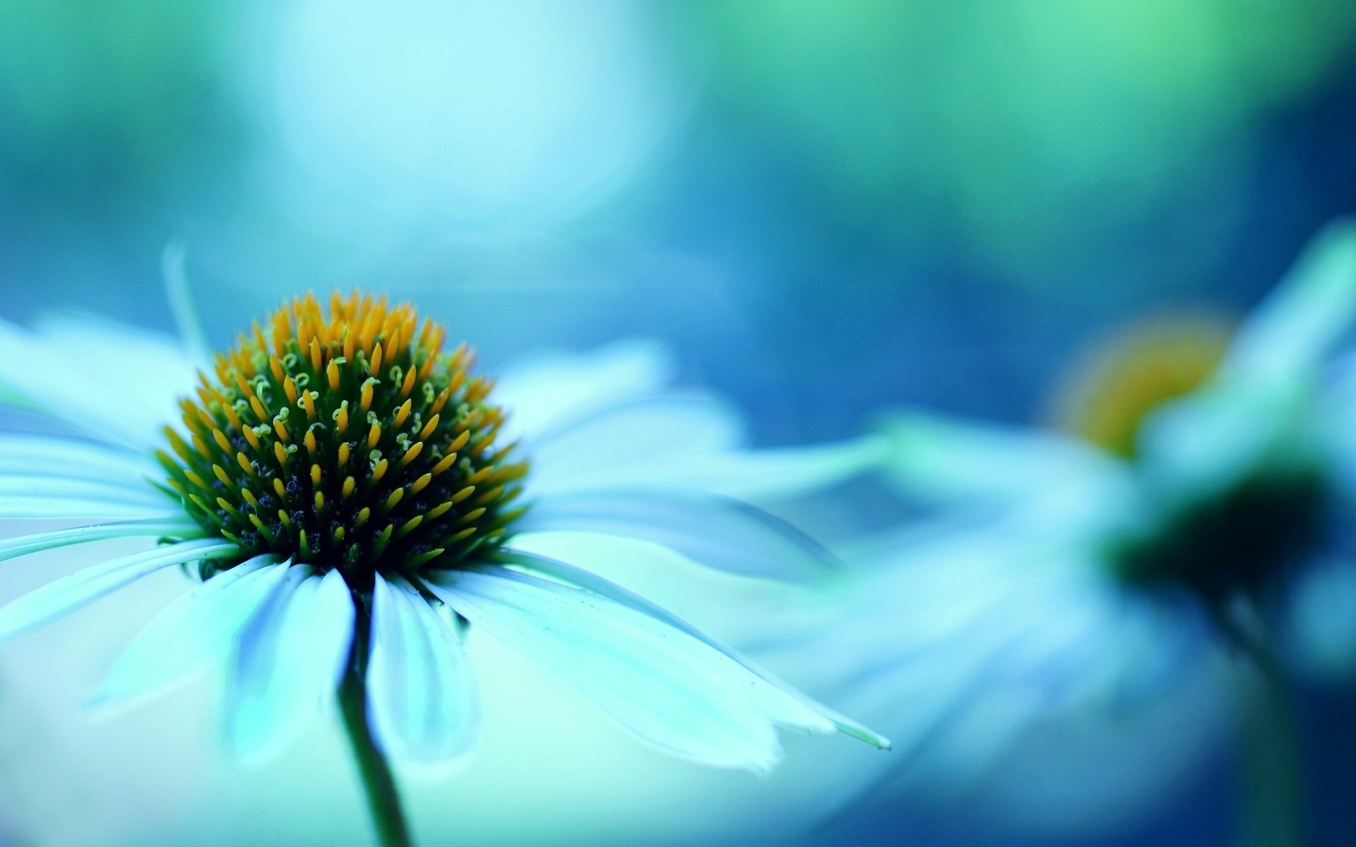 Обои размытость, цветы. Цветы foto 16