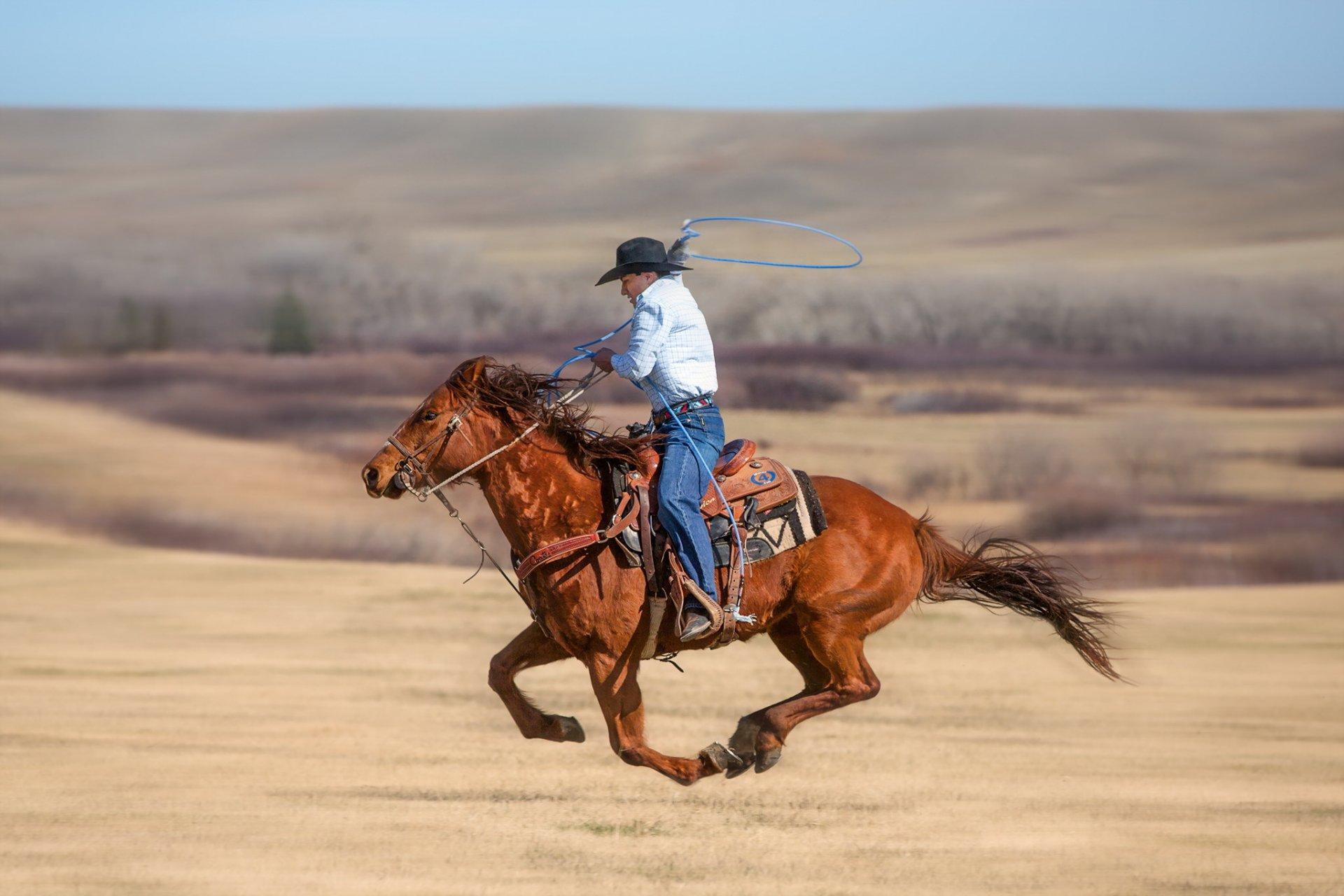 Ковбой картинки на коне