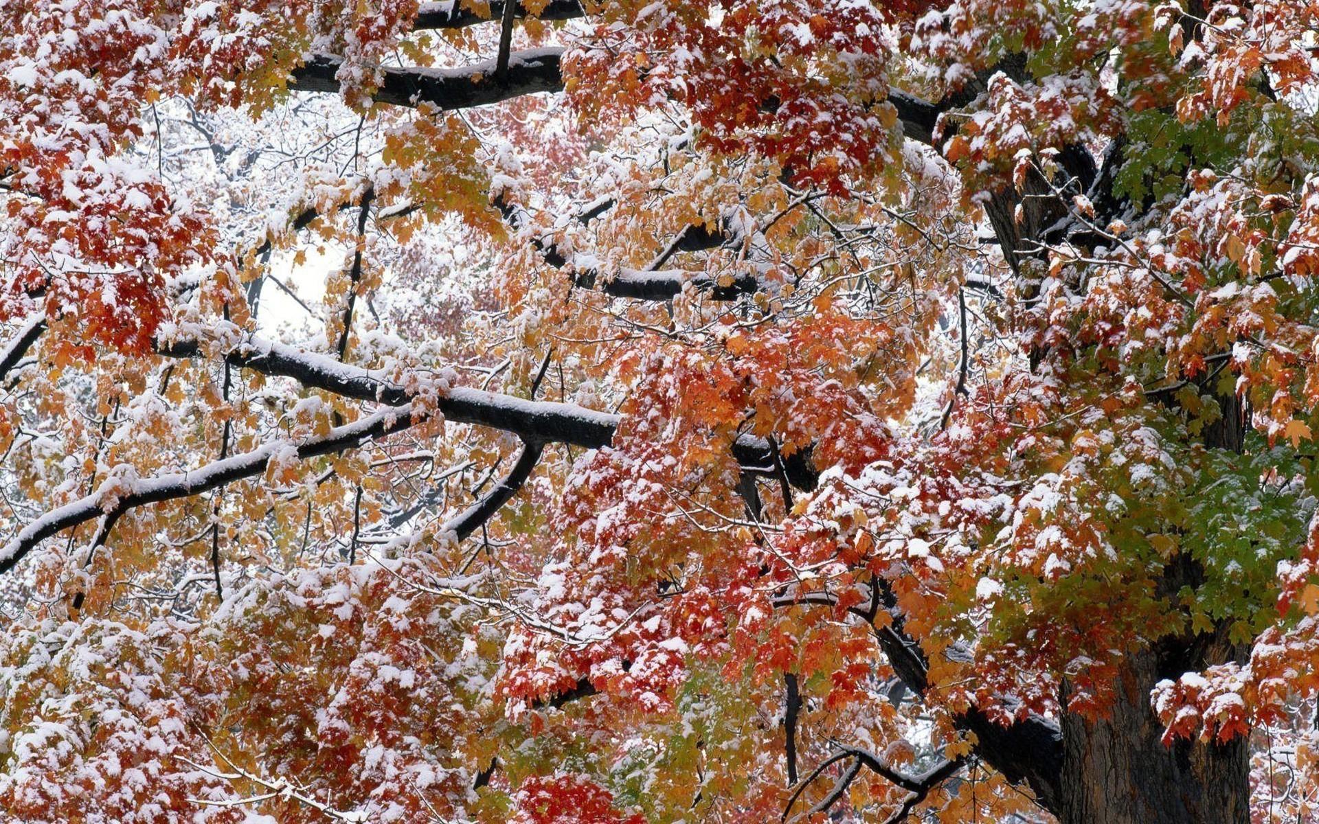 осень первый снег обои рабочего стола № 637033  скачать