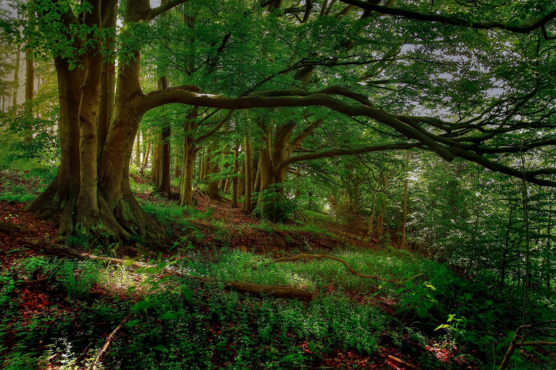 Красивые картинки леса высокого качества
