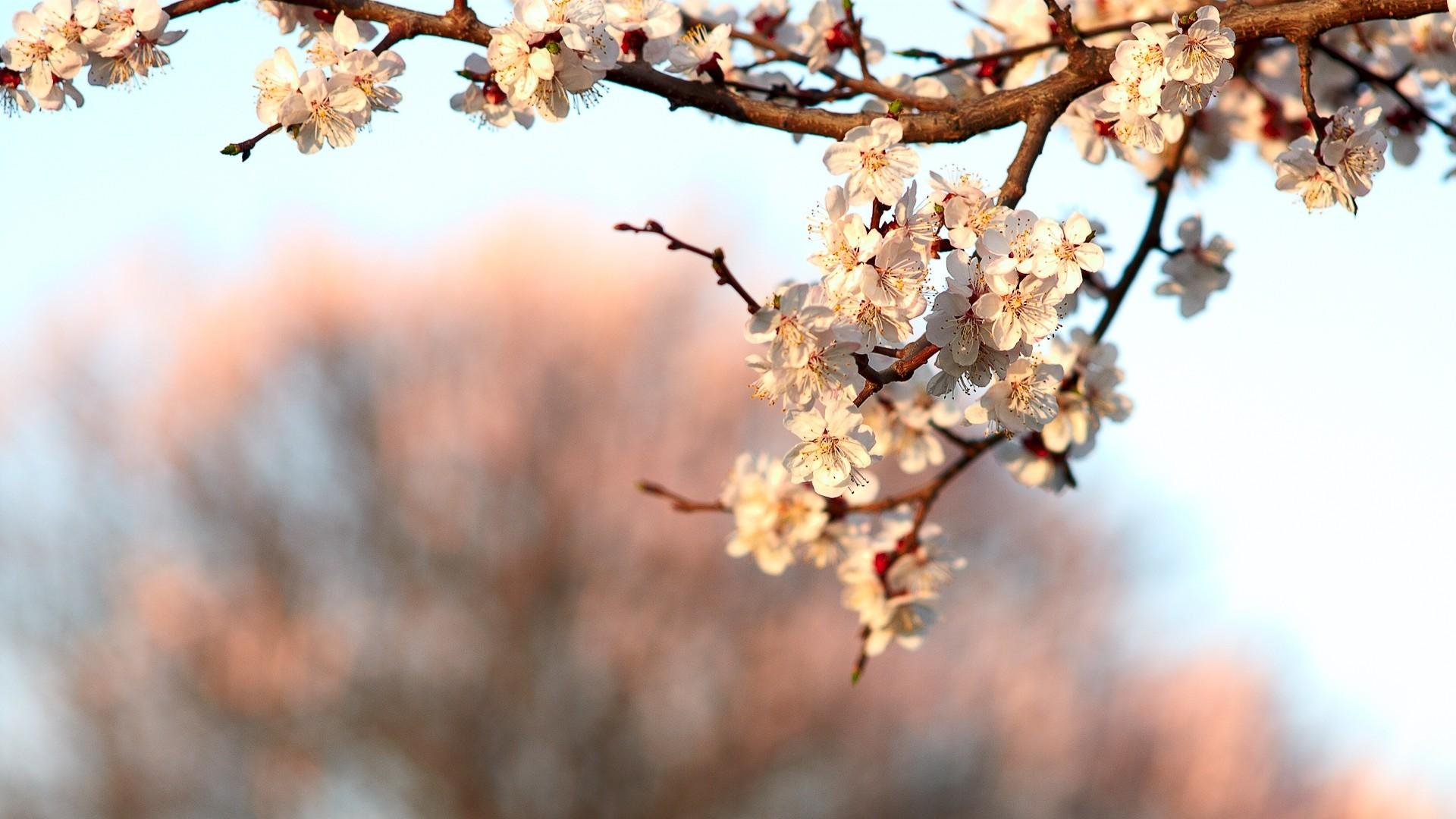 весна природа ветки загрузить