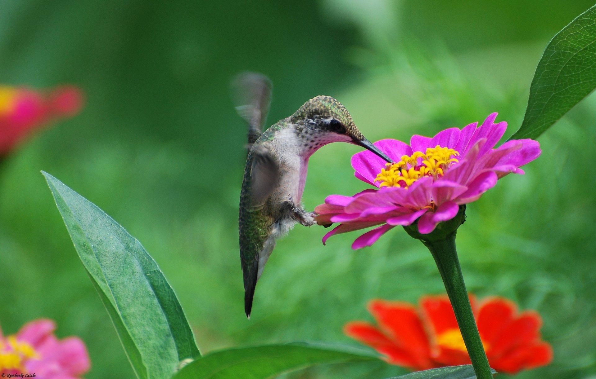 птица цветок  № 2034167 бесплатно