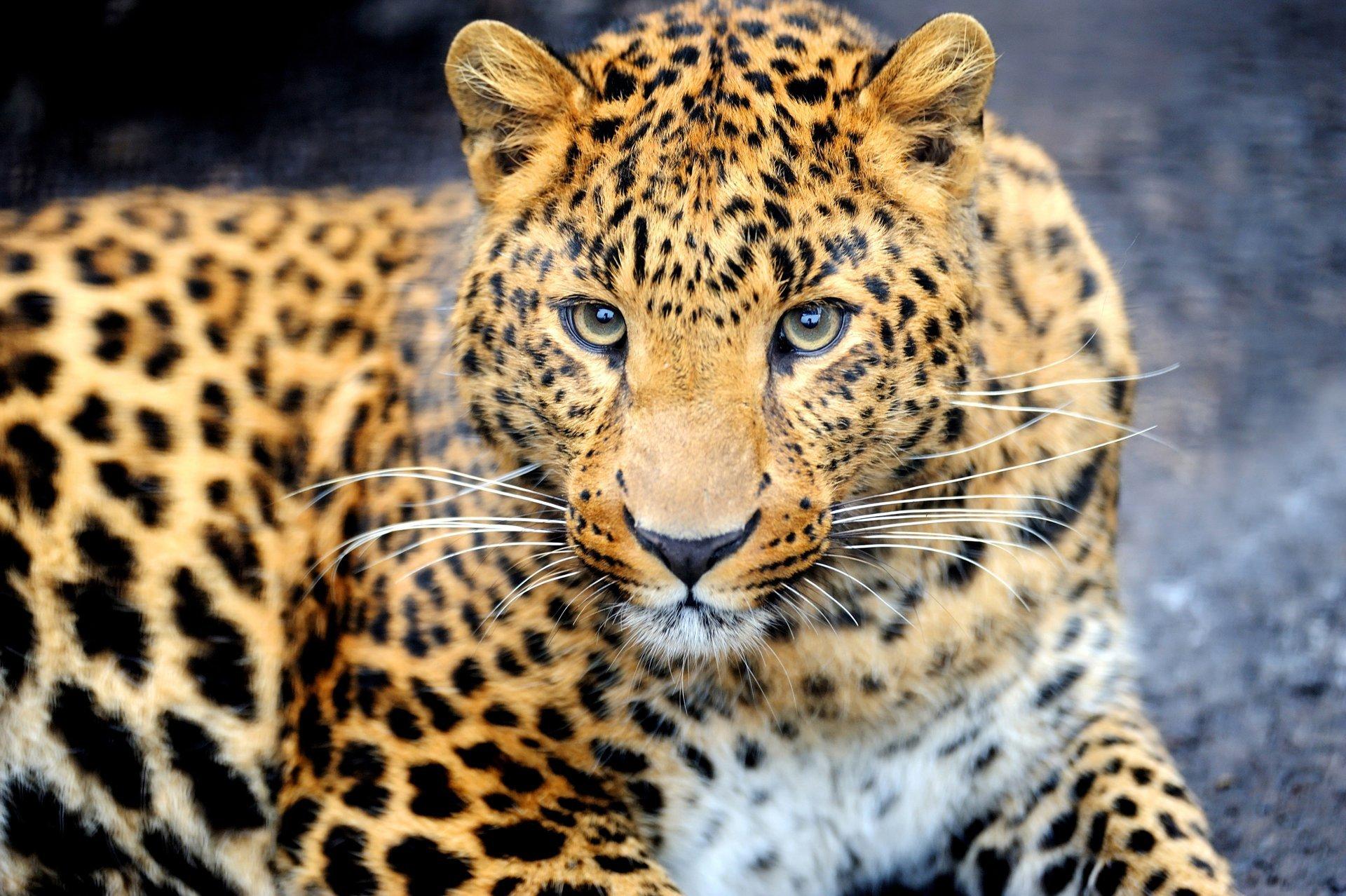 Красивое картинки с животными
