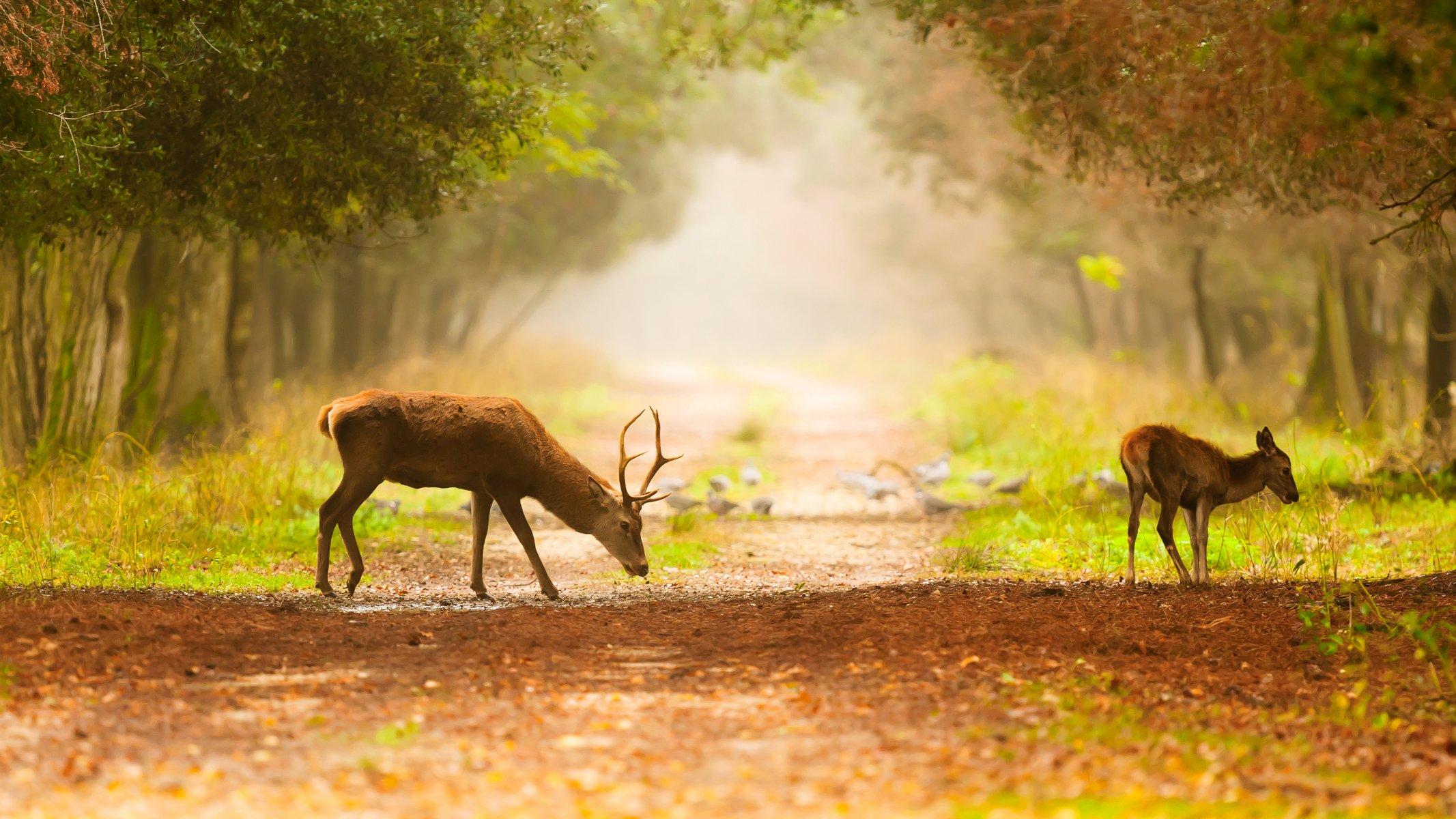 Картинки на рабочий стол животными и природа