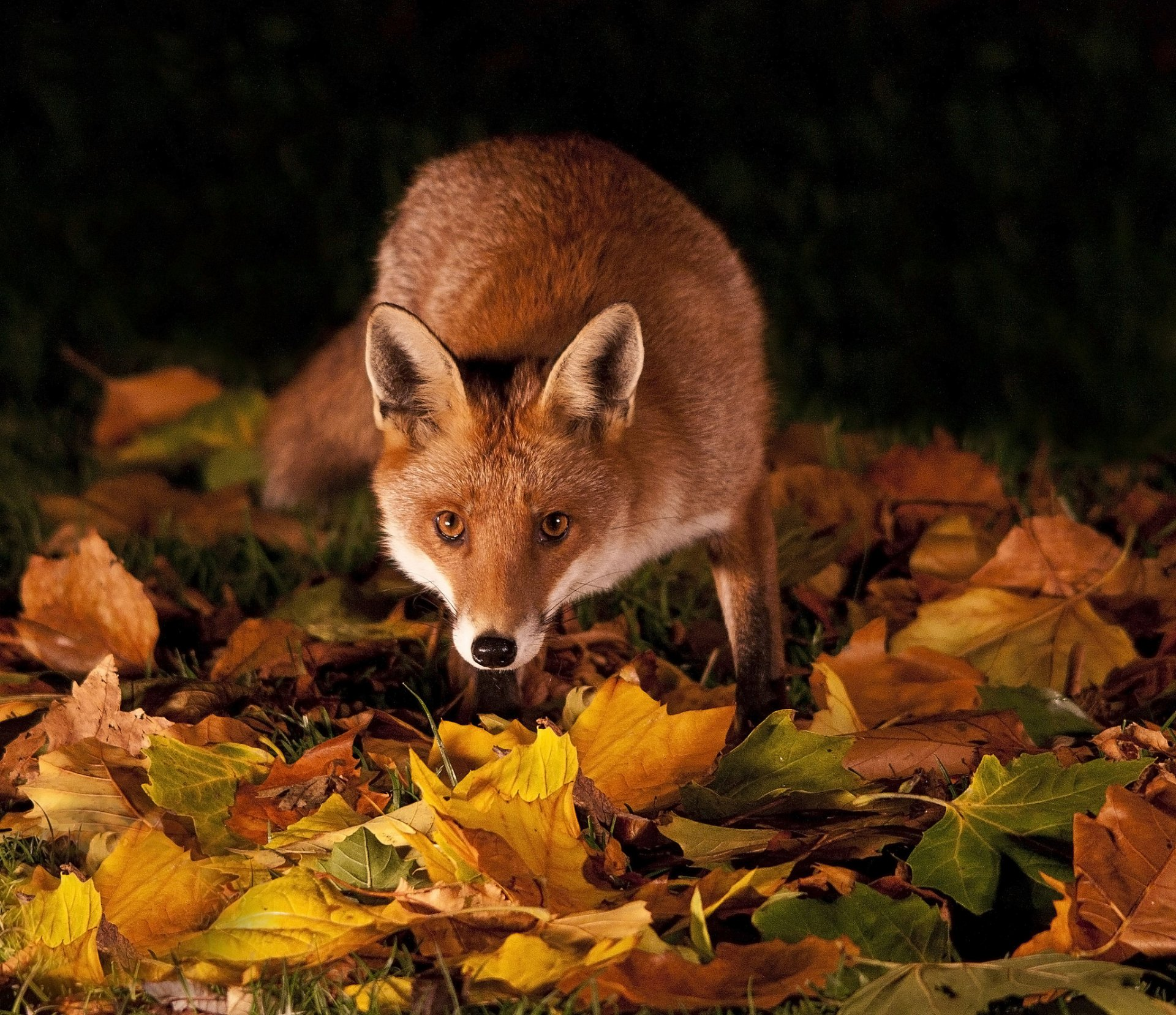 животные и осень в картинках для время создания
