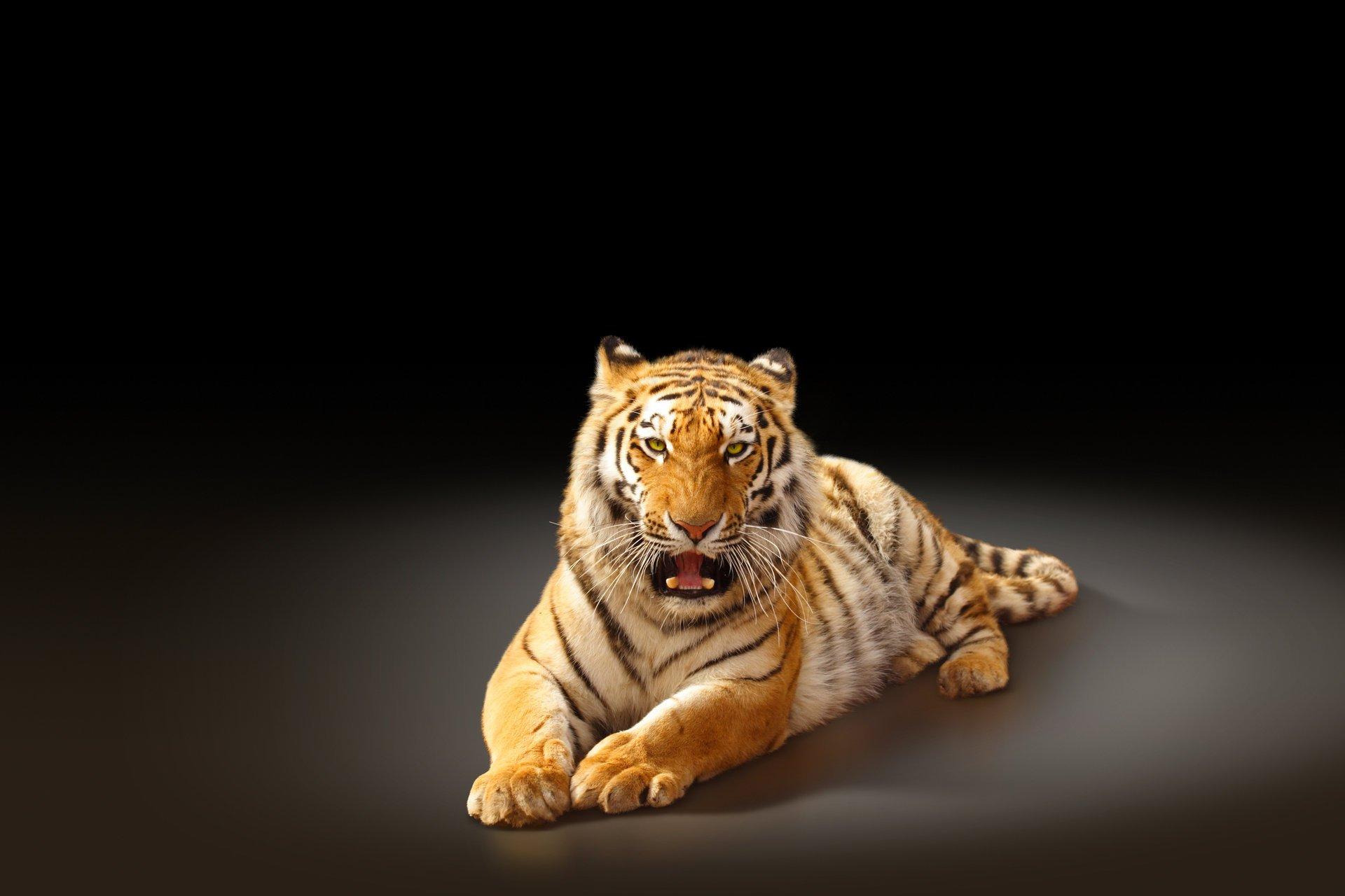 Тигр картинка на планшете