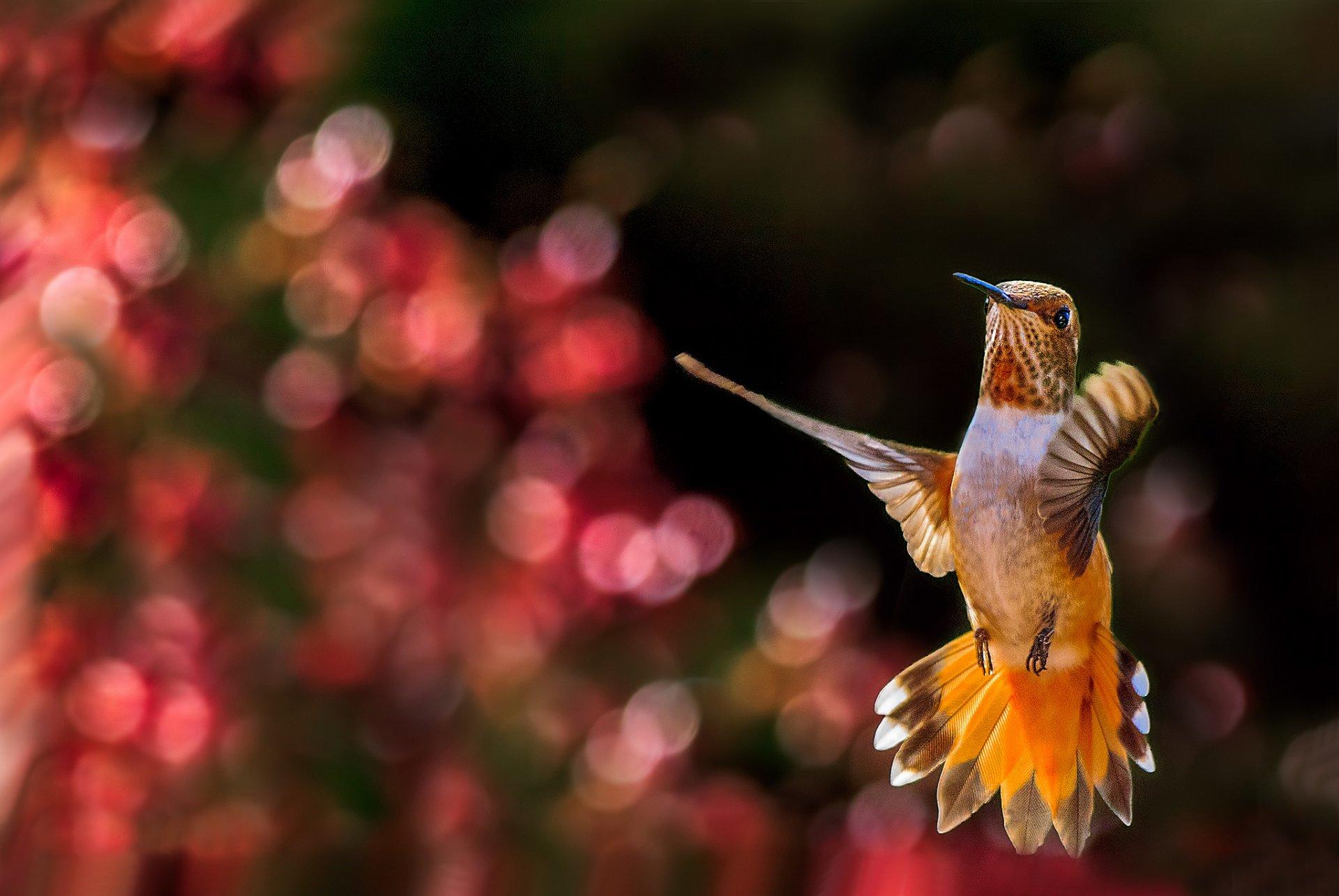мол очень красивые птицы снились политику