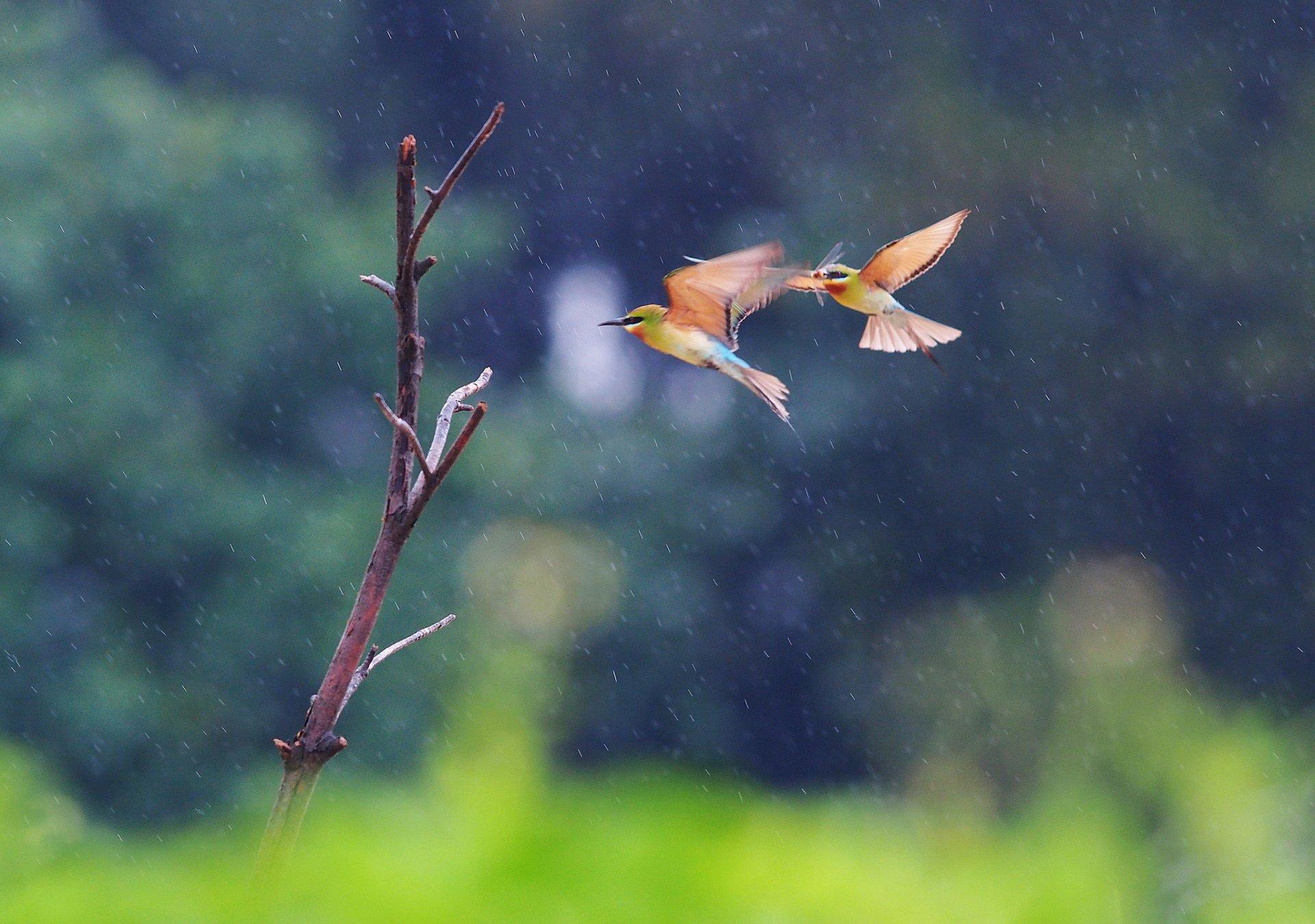 мокрая птичка загрузить