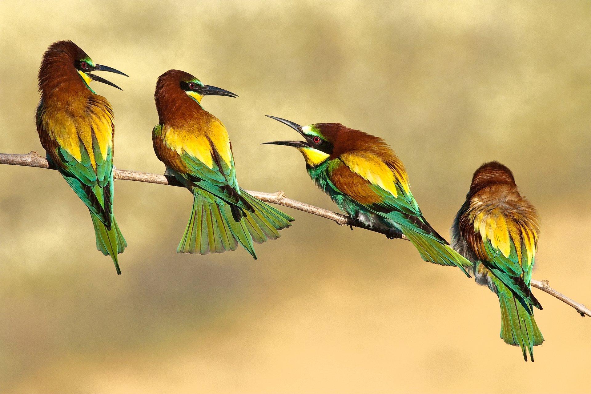 с птицами картинки про можно найти