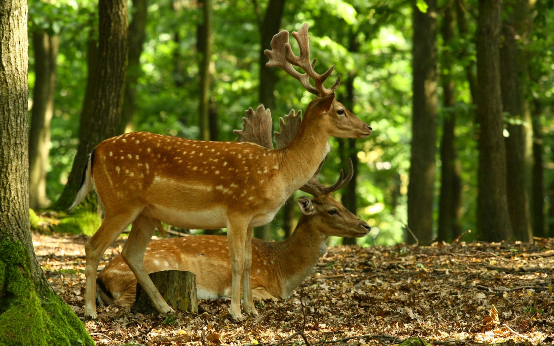 природа животные nature animals без смс