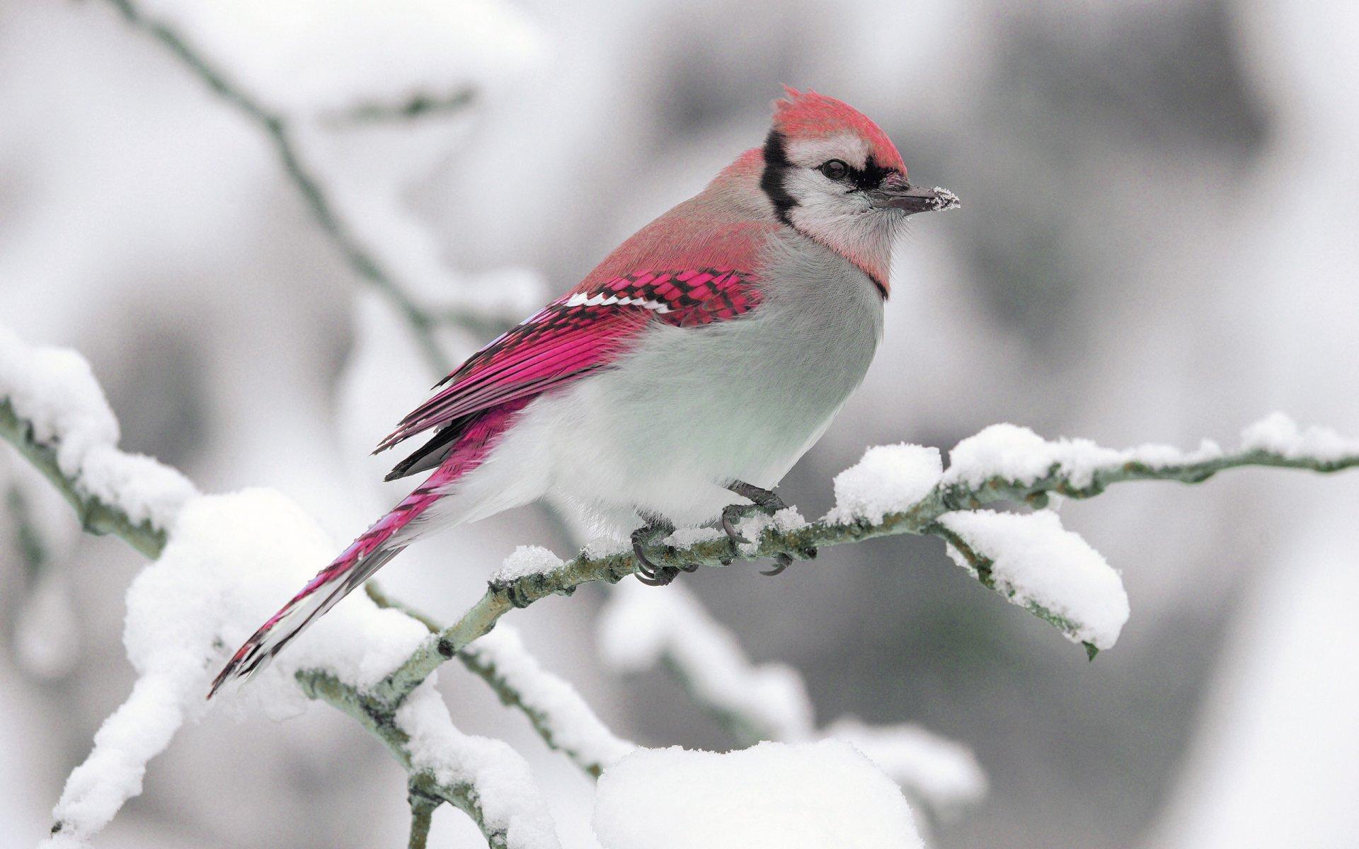природа животные птицы деревья зима снег загрузить