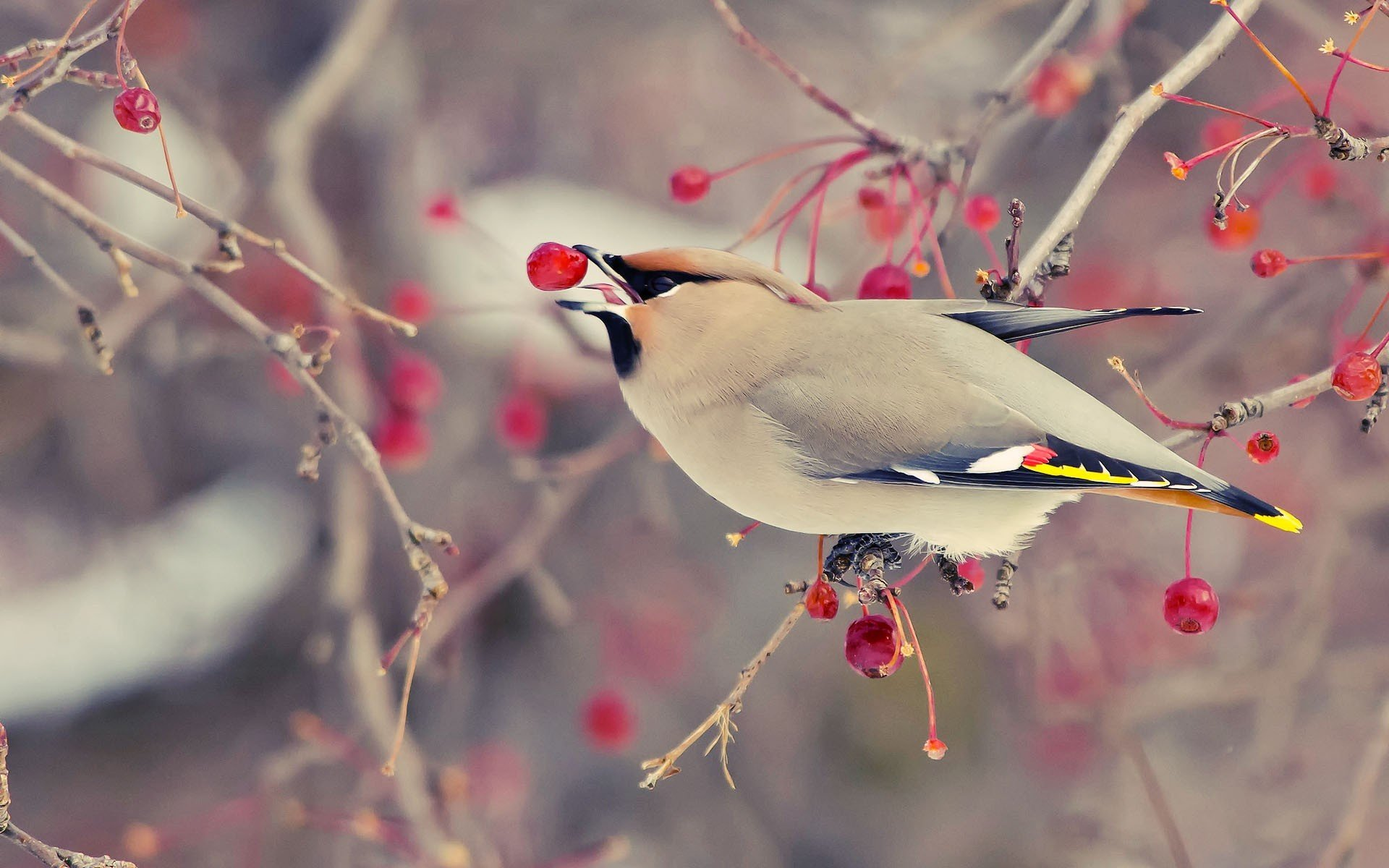 птица хохолок ветки без смс