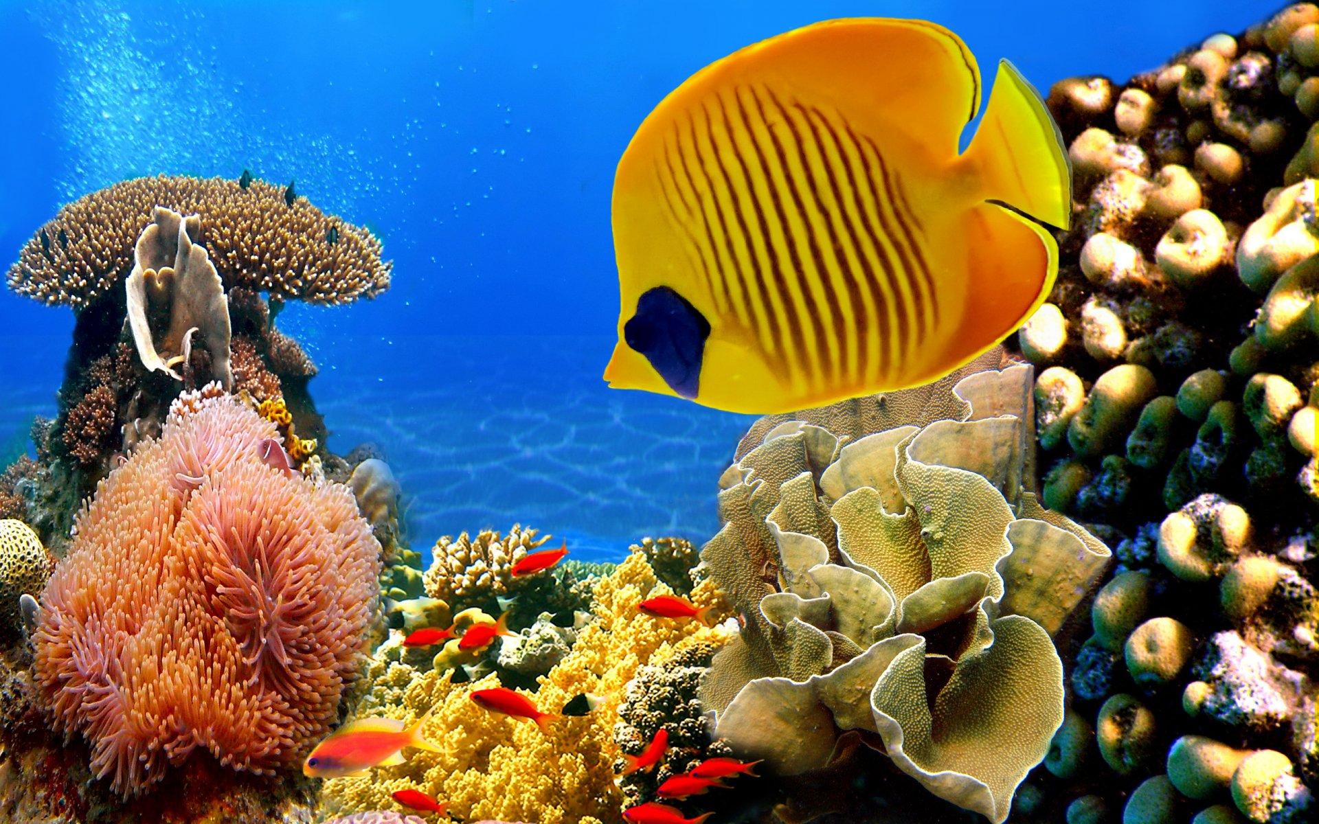 Красное море фото под водой нам