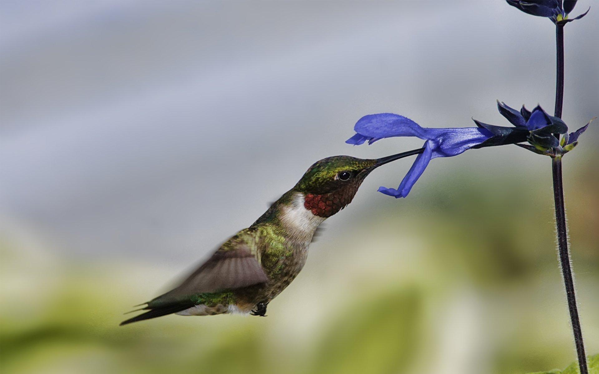 птица цветок  № 2034095 загрузить