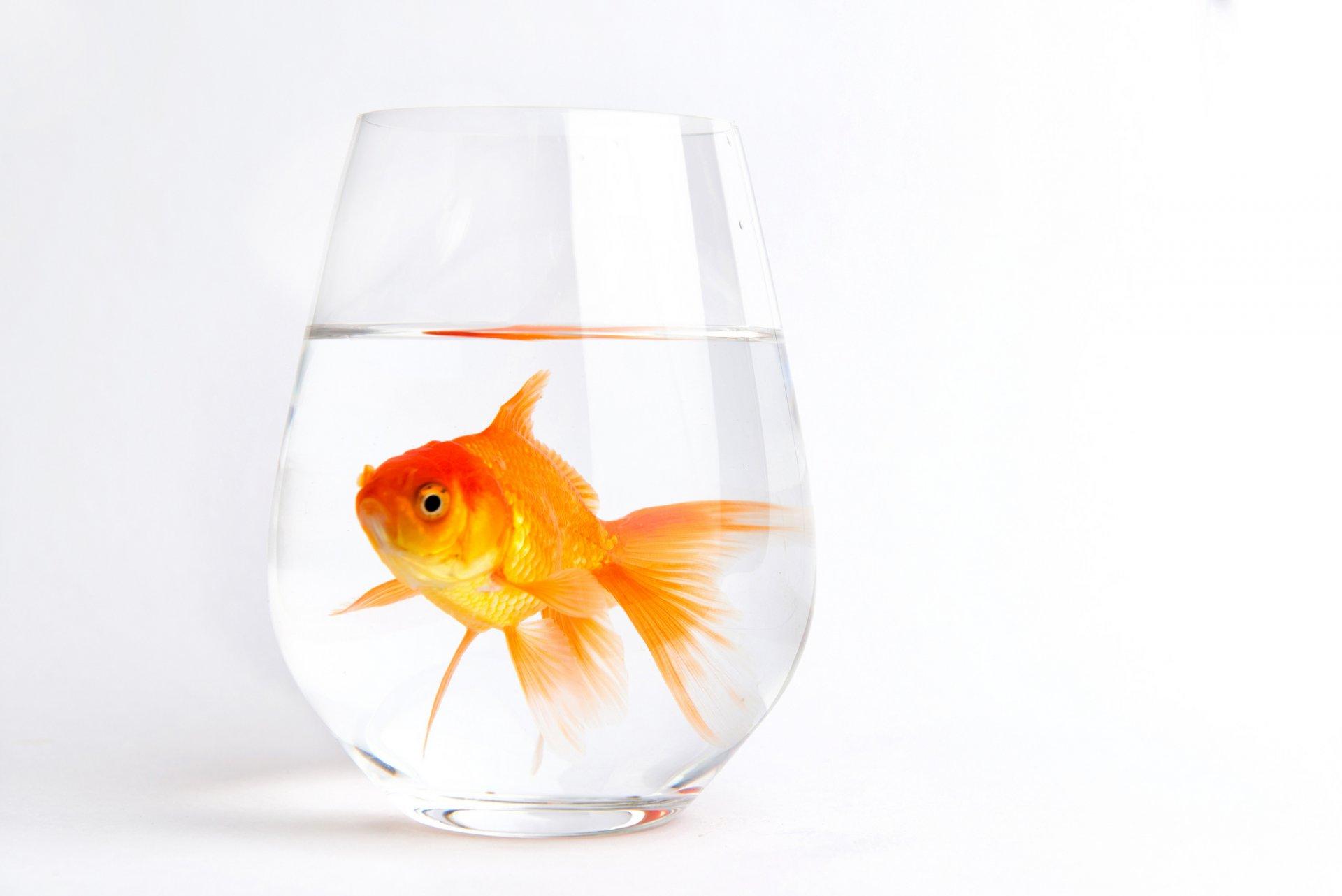 Картинку именем, рыбка в аквариуме открытка