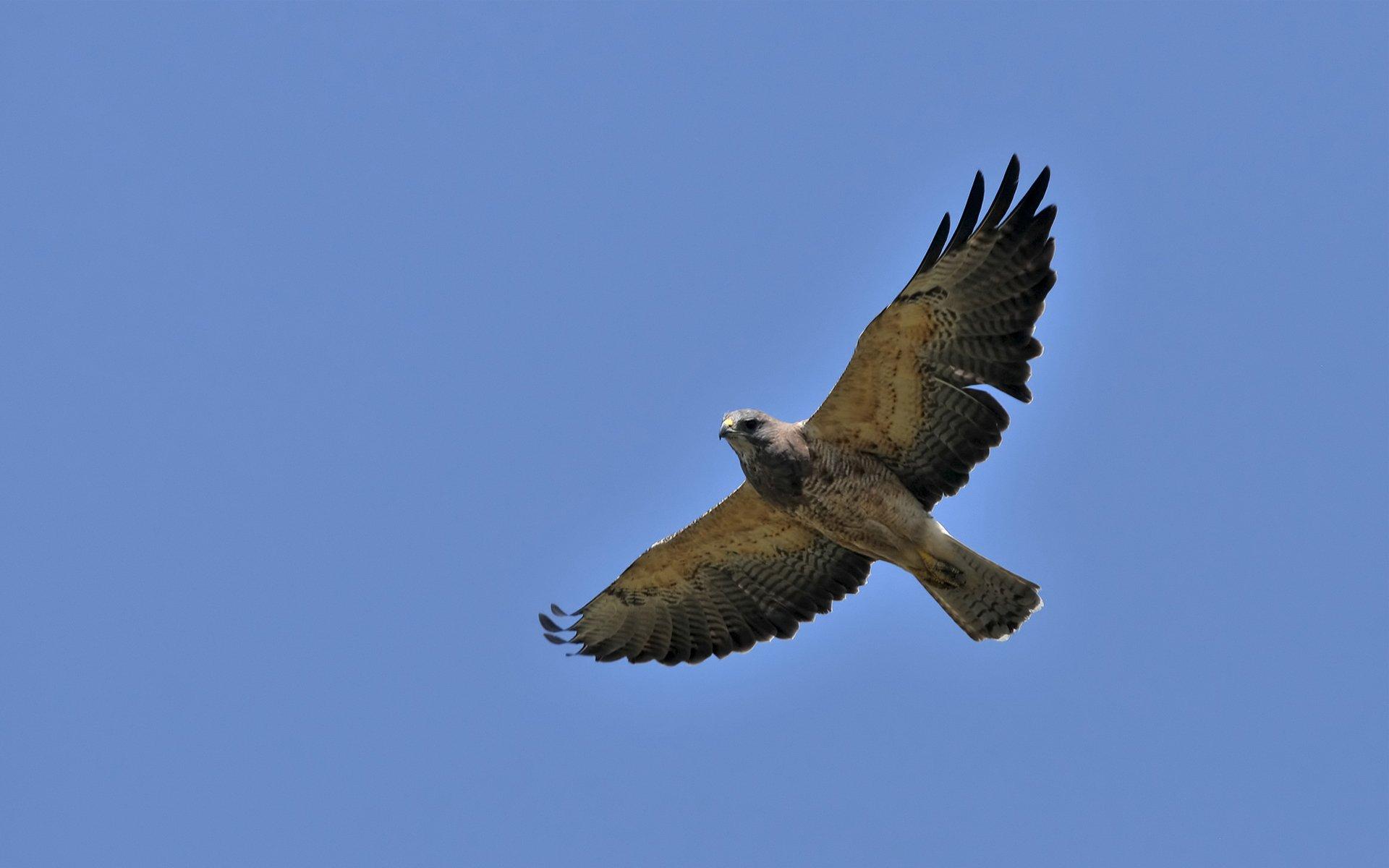 полет ястреб flight hawk бесплатно