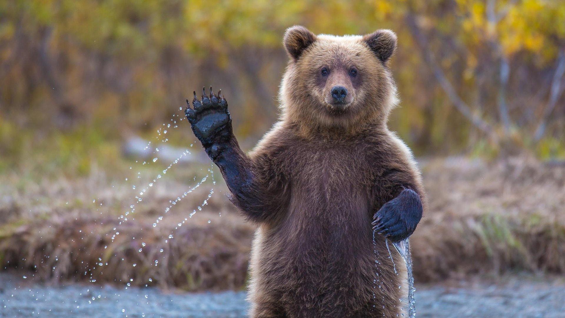 обои на телефон красивые медведи