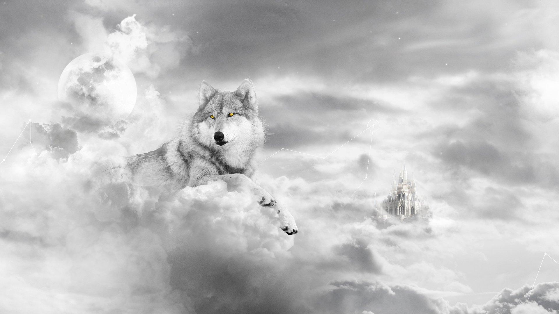 Lone white wolf wallpaper