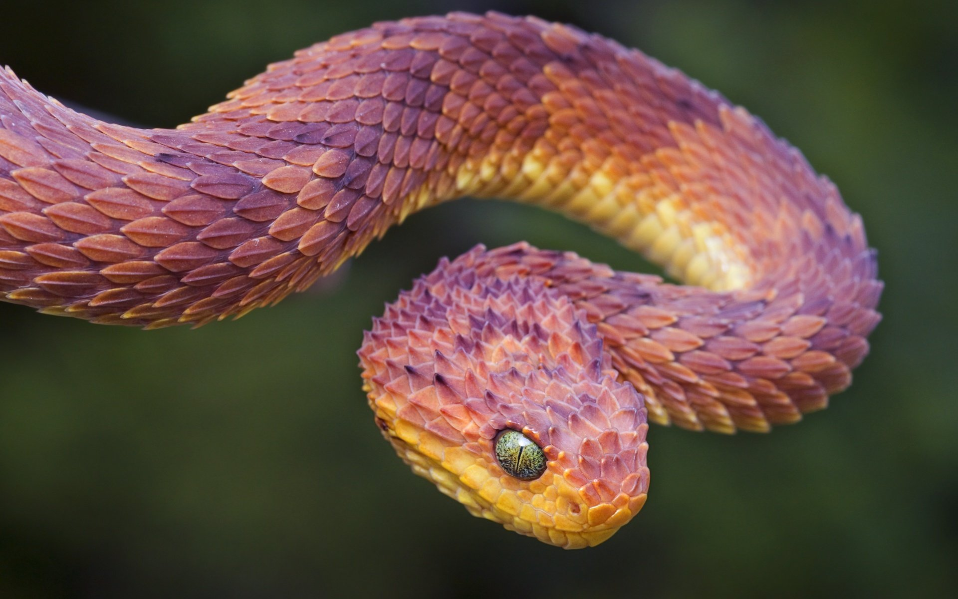 Most colorful animal in the world