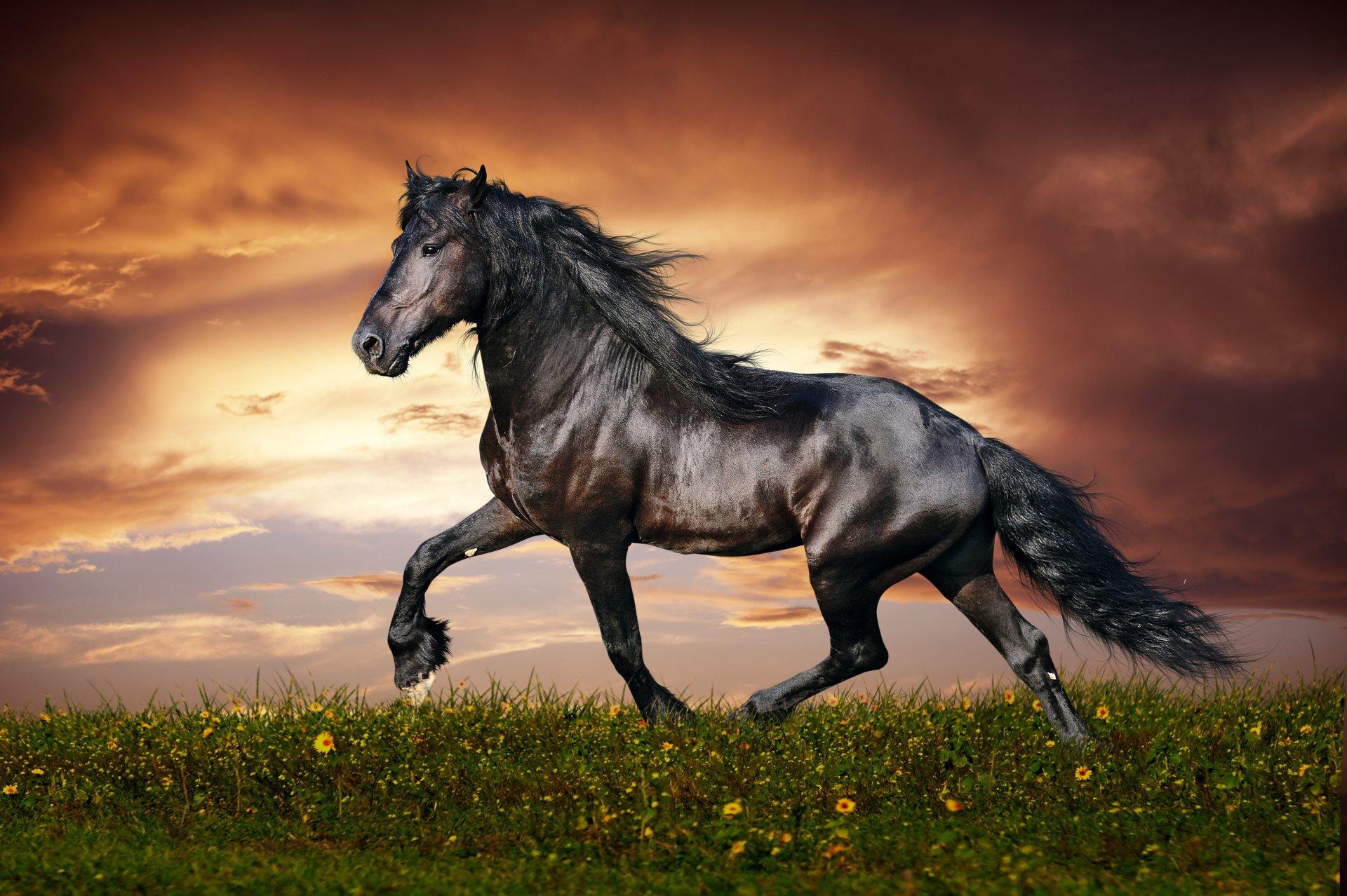 Картинки с лошадьми на компьютер, картинки торт поздравления
