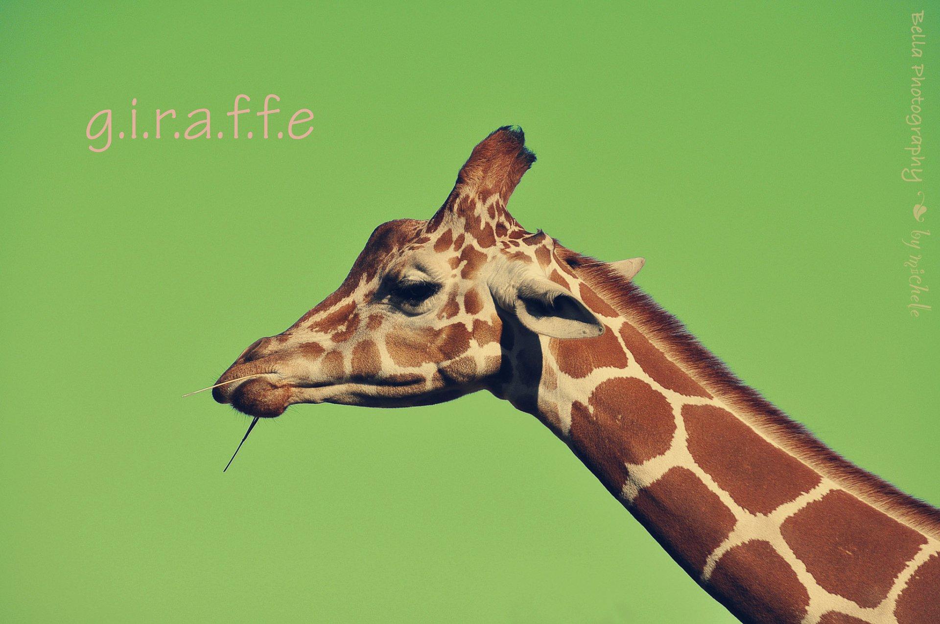 Картинки, смешные картинки жирафа с надписями
