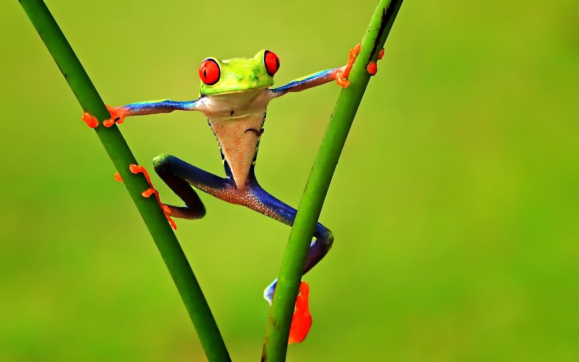 Funny tree frog pictures