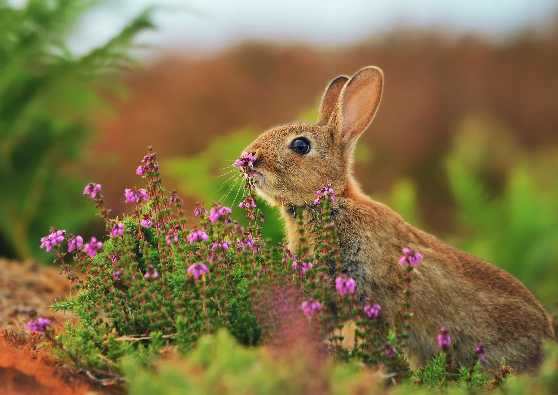 Весна животные обои