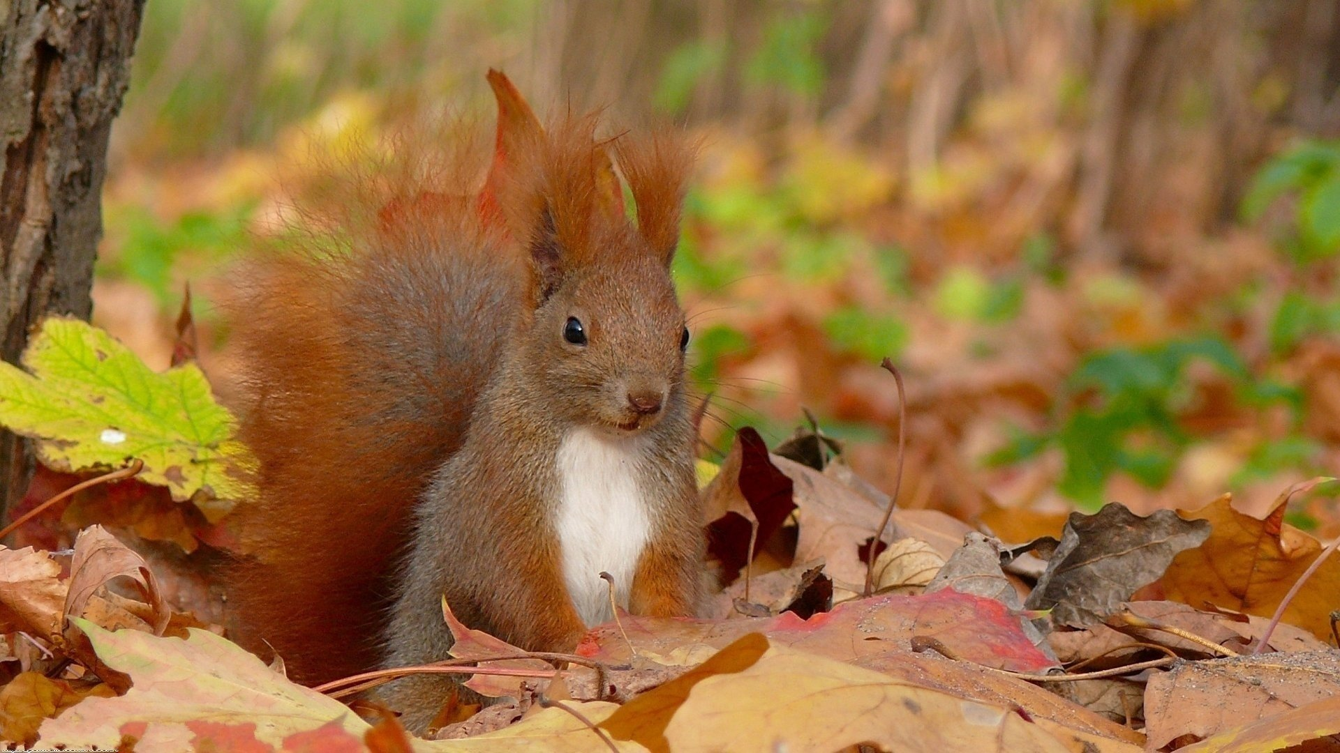 природа животные кролик листья осень деревья  № 2035260 бесплатно