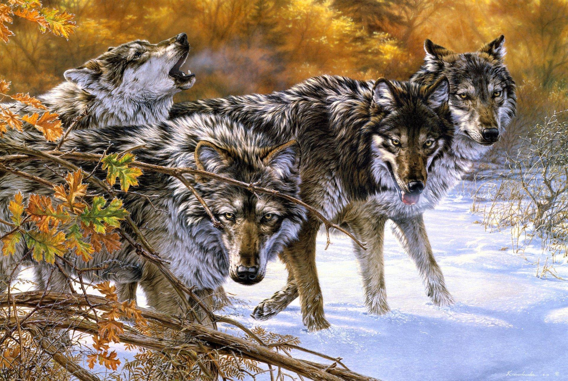 картинки про волков для обоев чтобы