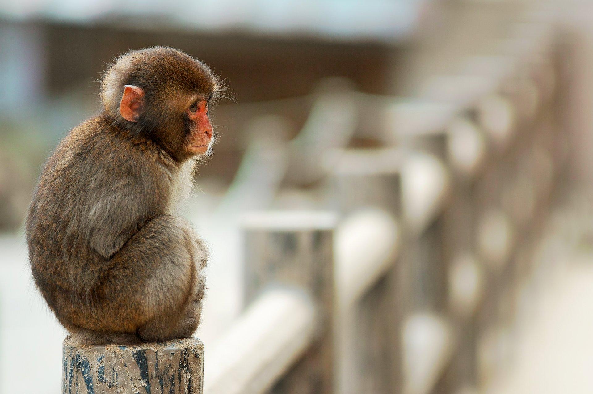 проходили обезьяны на столе картинка зовут