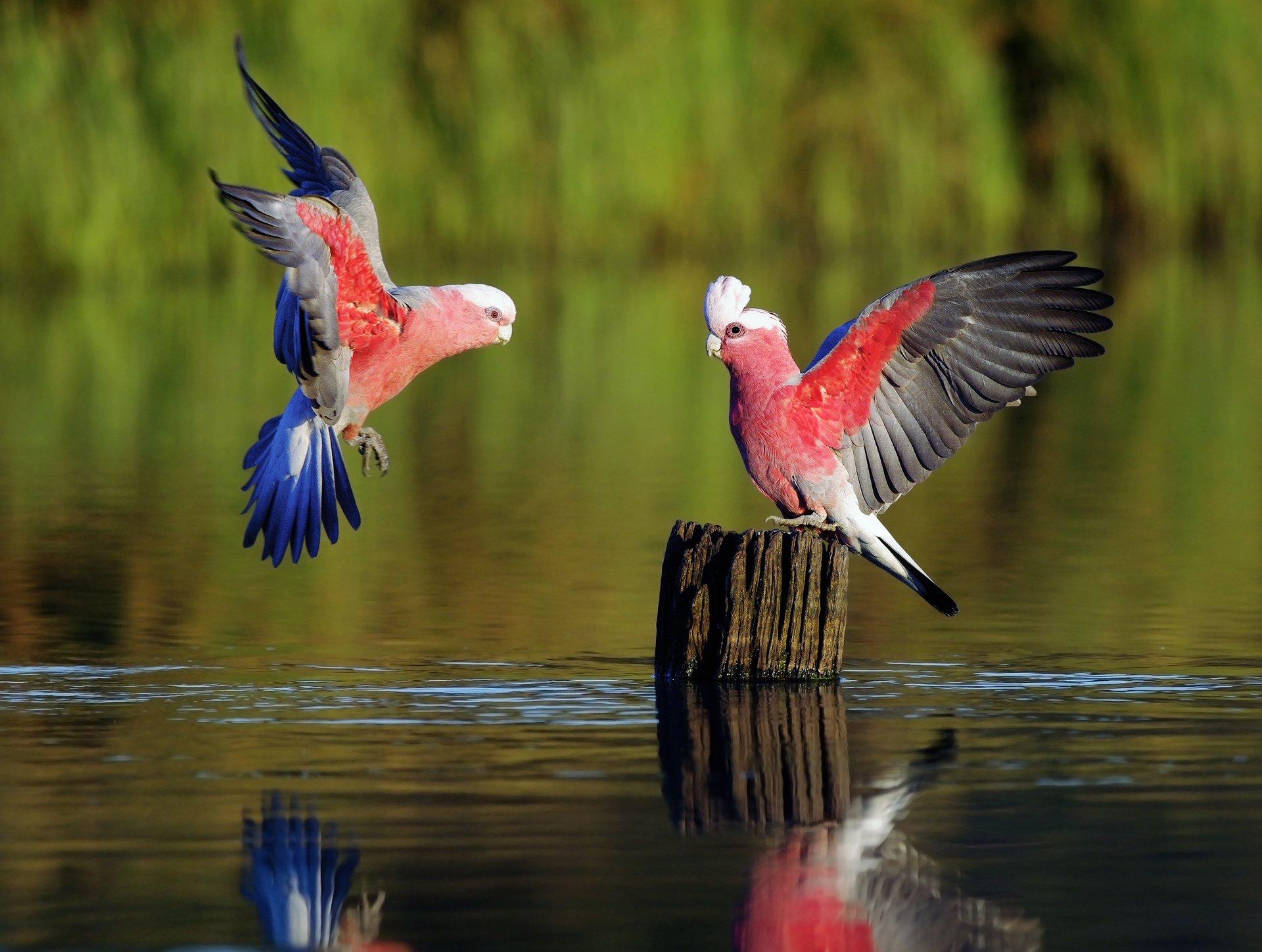 природа животные птица nature animals bird  № 2036894 загрузить