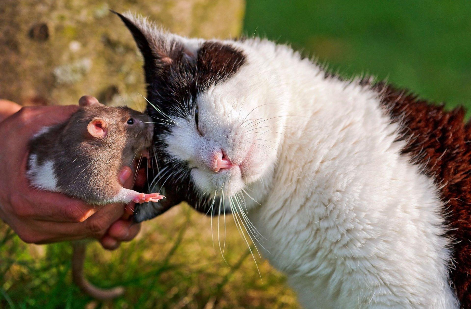 кот и мыши картинки фото оживляют помещение, так