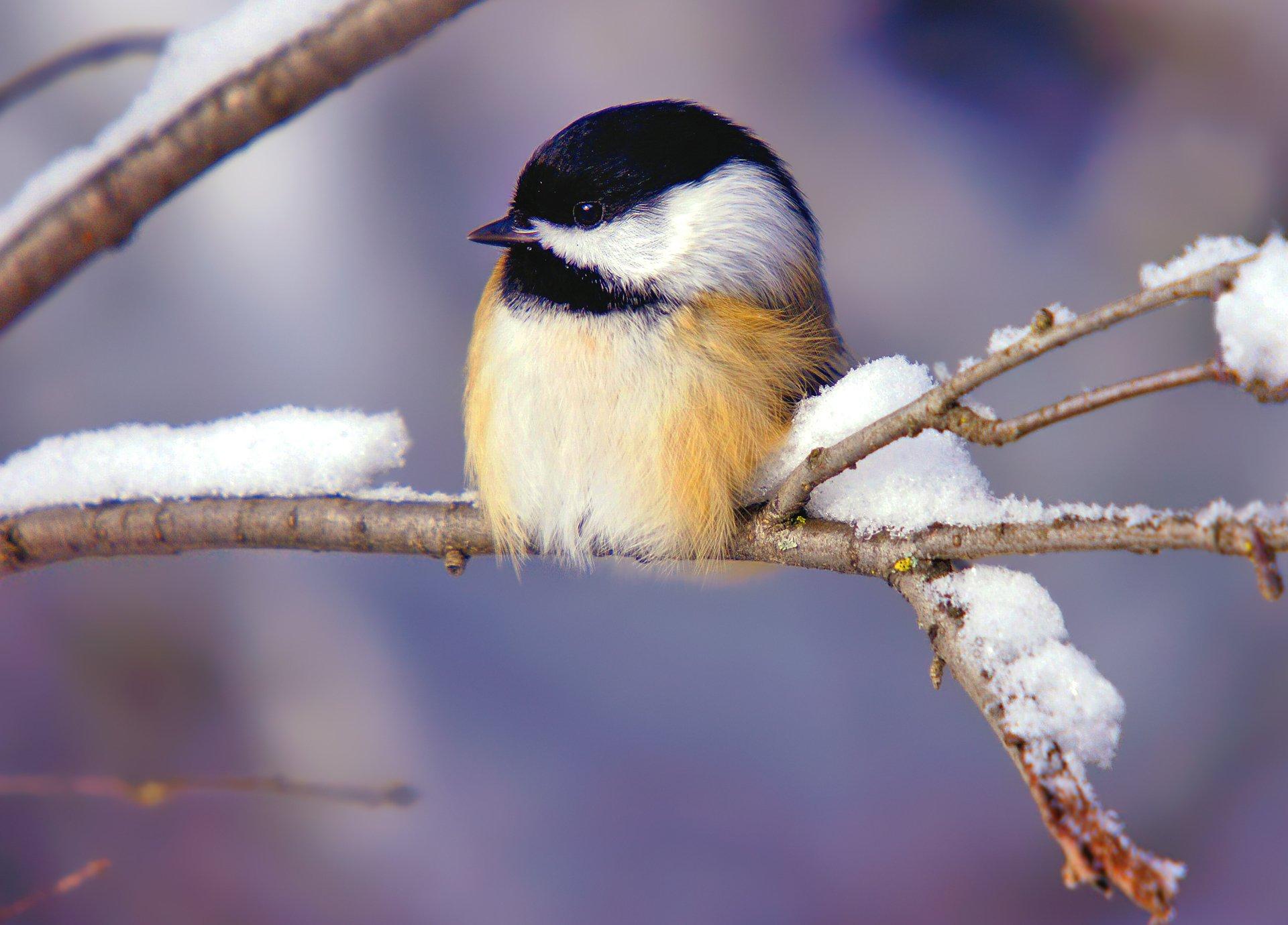 природа животные птицы деревья зима снег скачать