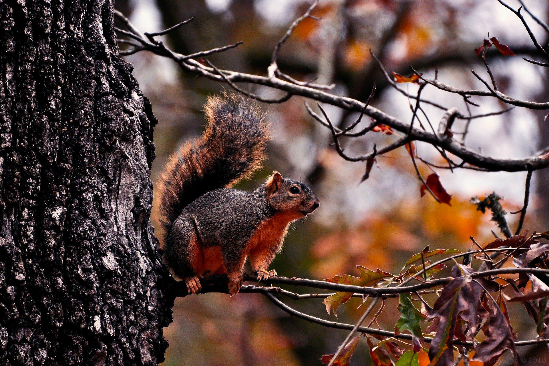 наша, фото белки на дереве осень этой отзыв