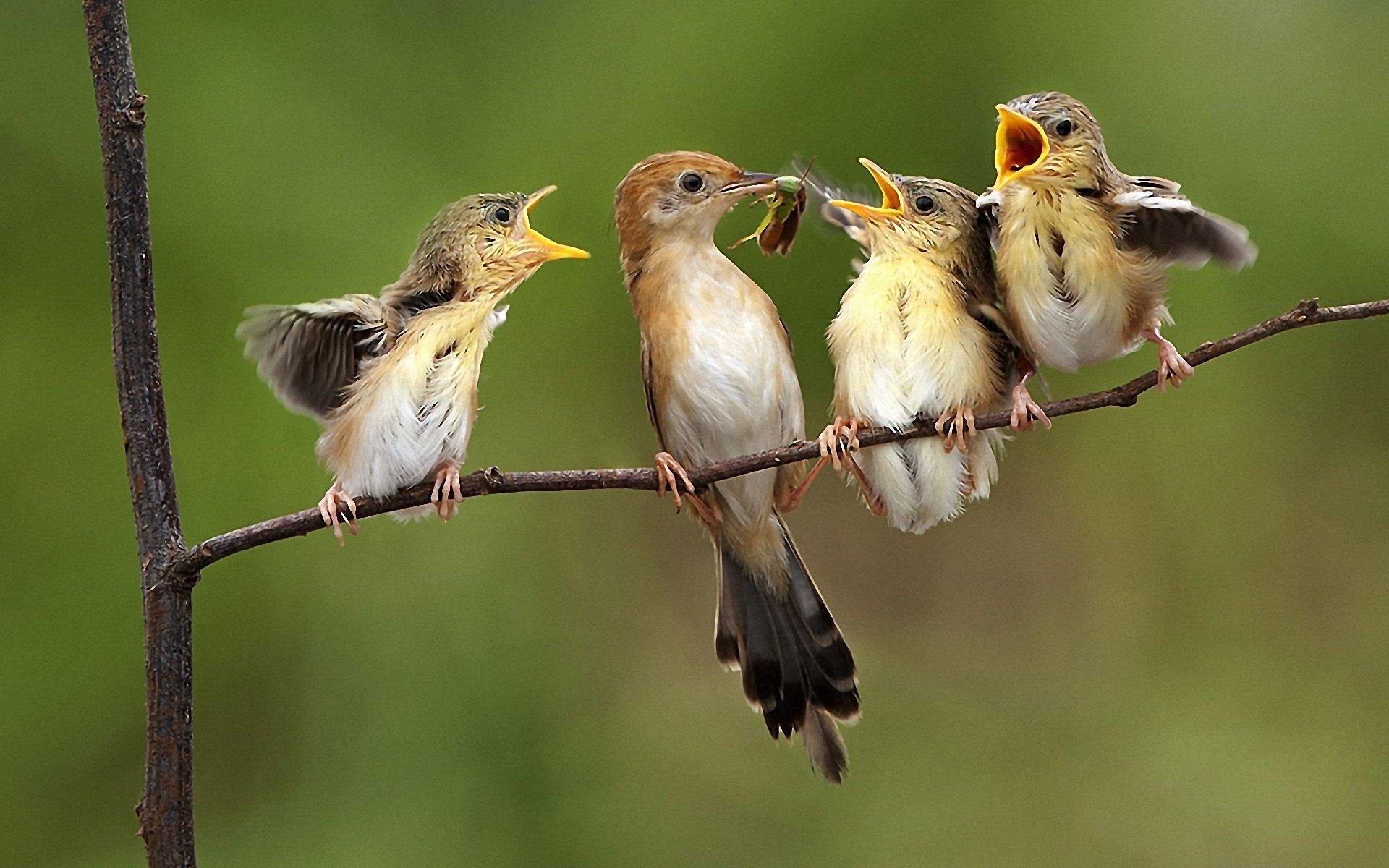 птичка словила завтрак без смс