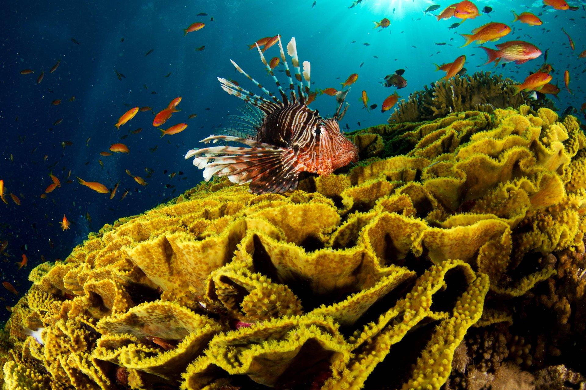 фотографе красивые фотографии морского дна мария