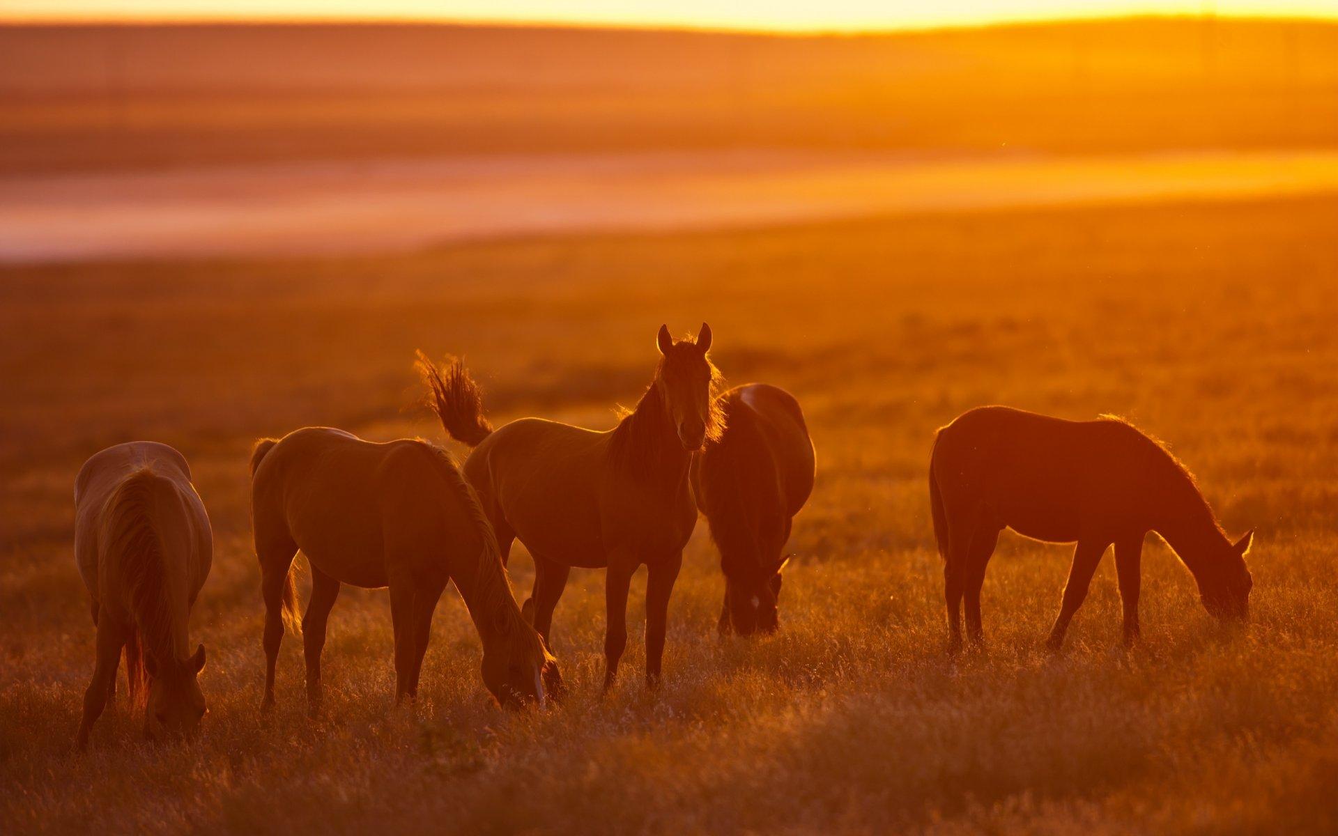 Спокойной ночи, картинки с изображением лошадей на восходе и закате