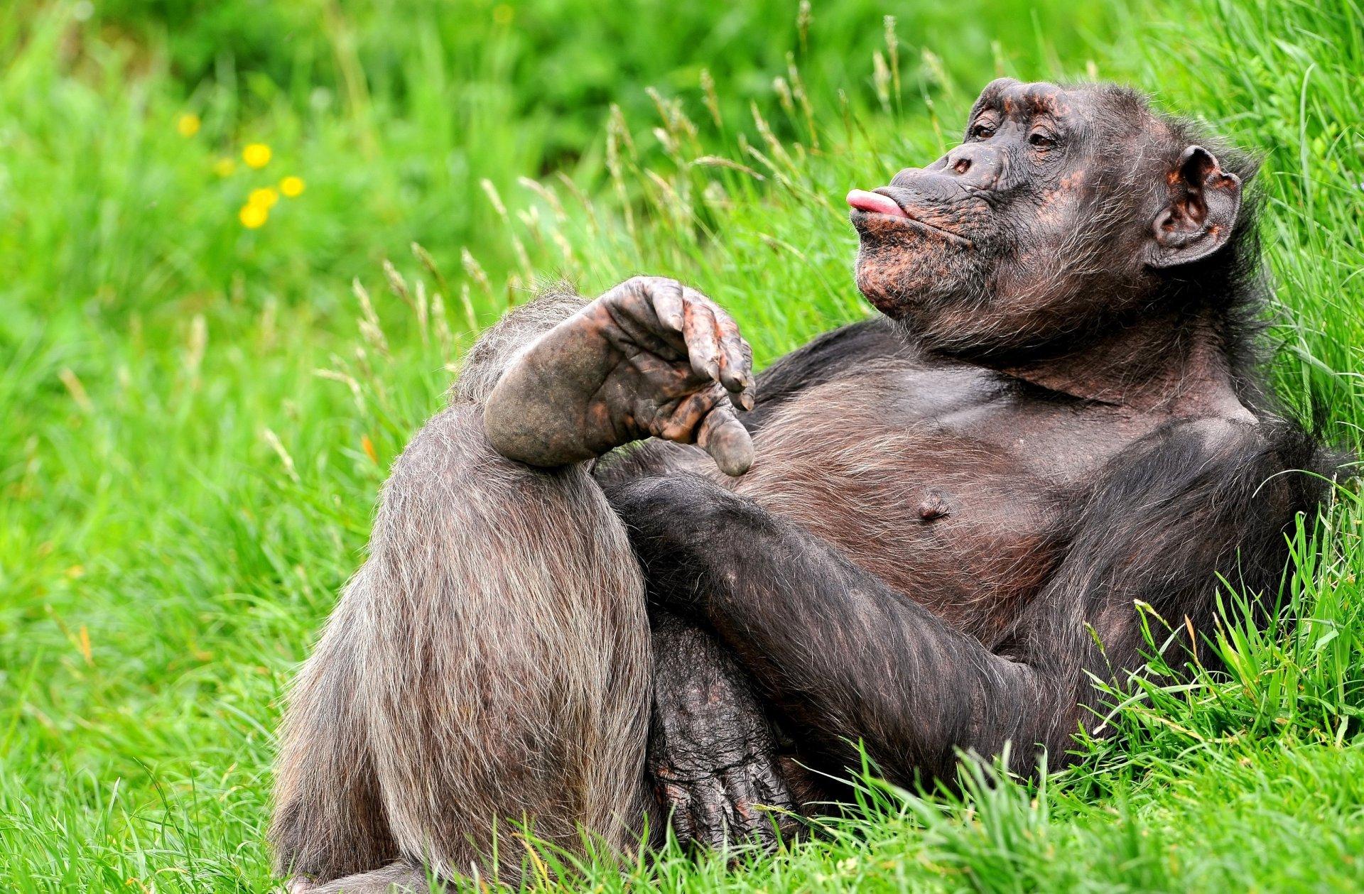 Прикольные ржачные картинки с животными
