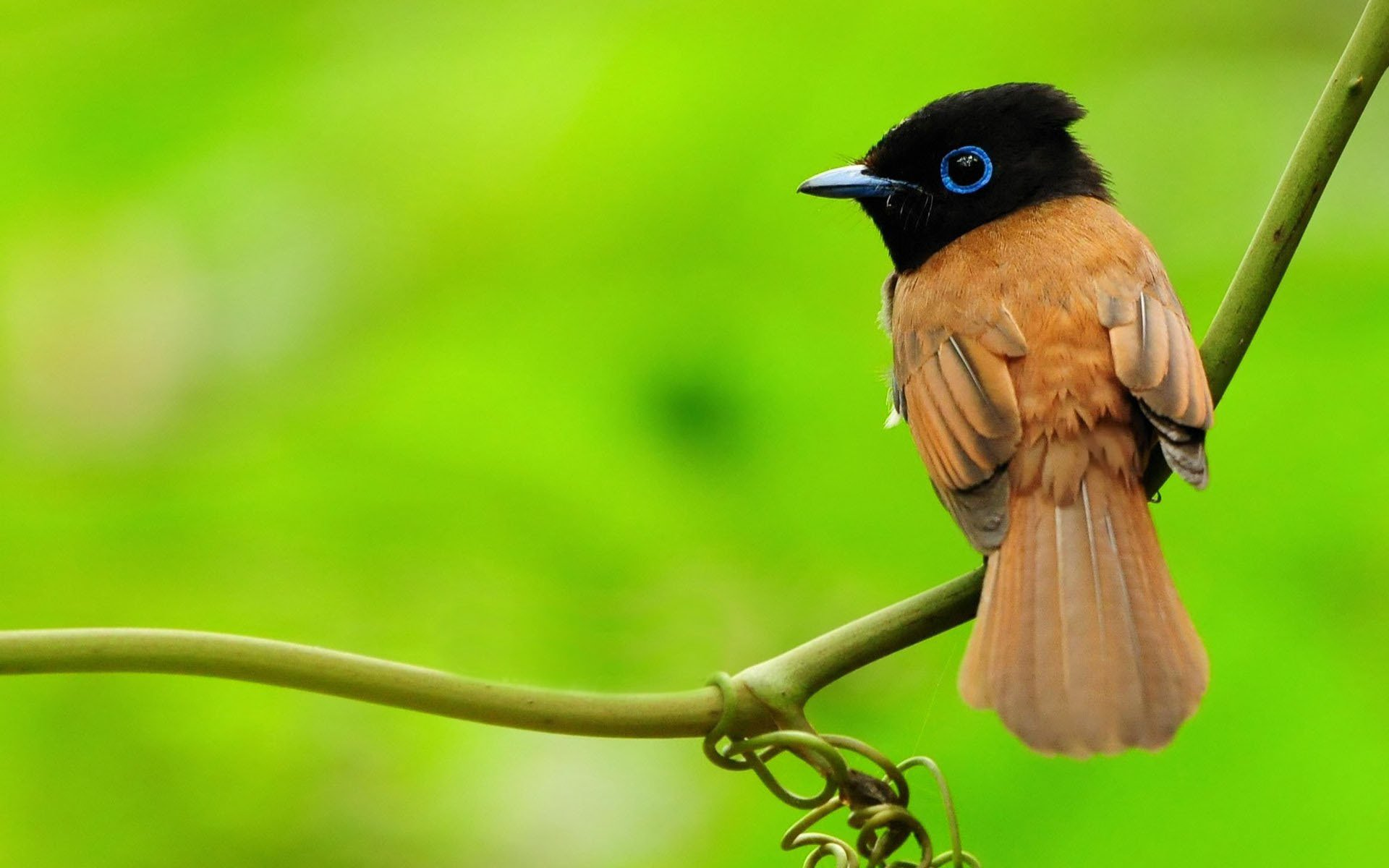 птичка ветка зелень bird branch greens загрузить