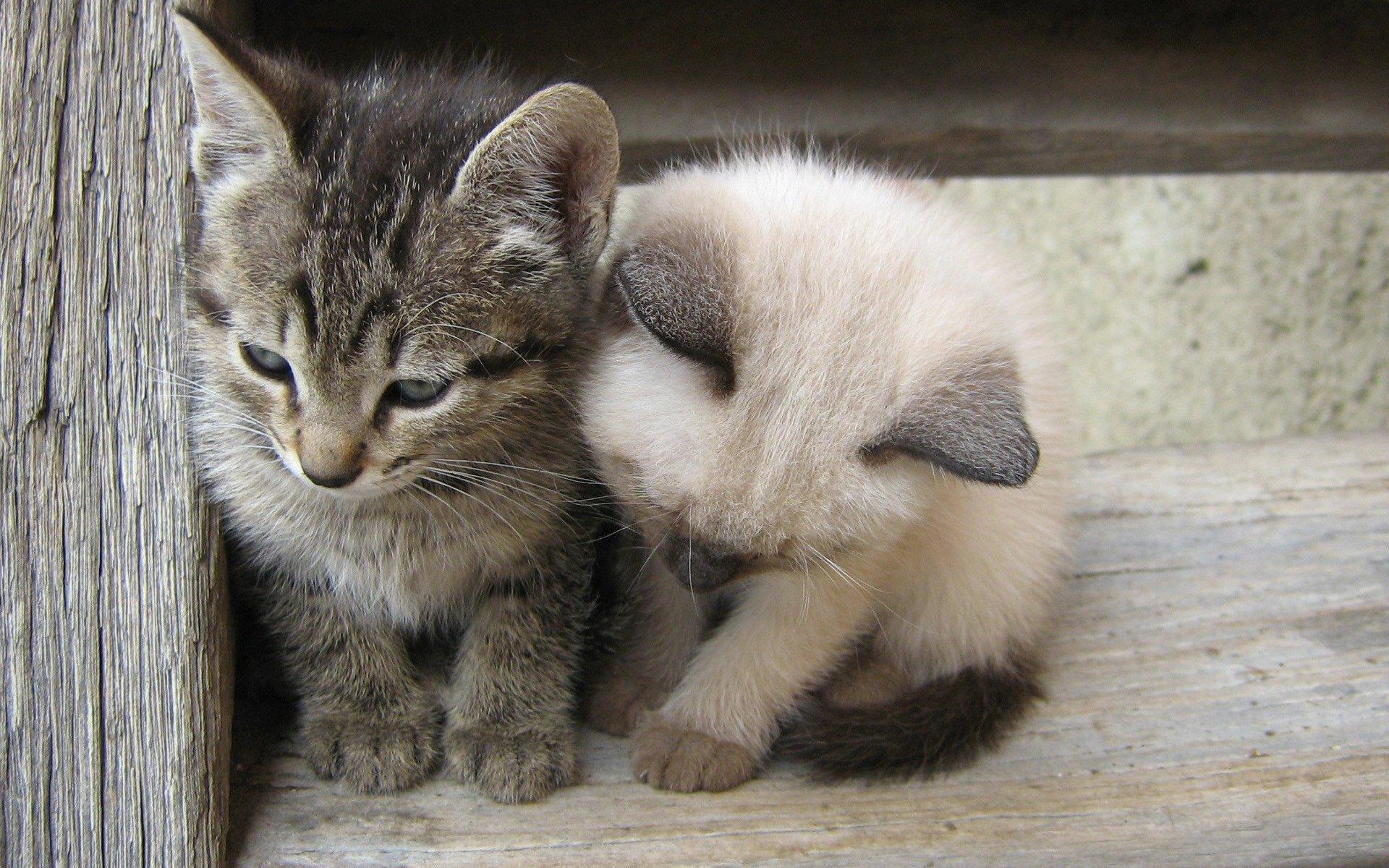 Картинки смешных маленьких котят