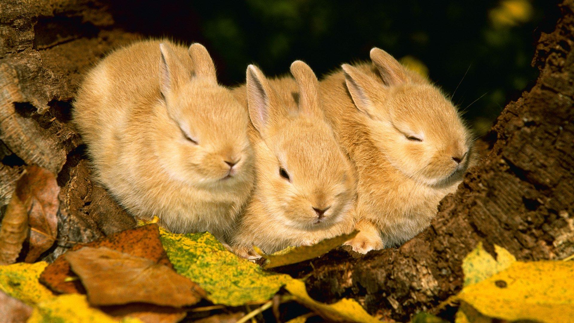 Красивые фото с животными на природе