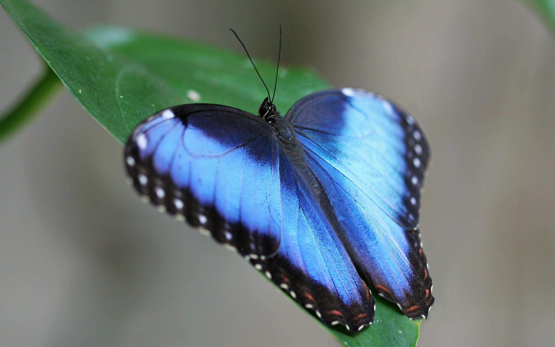 фото бабочек высокого качества так