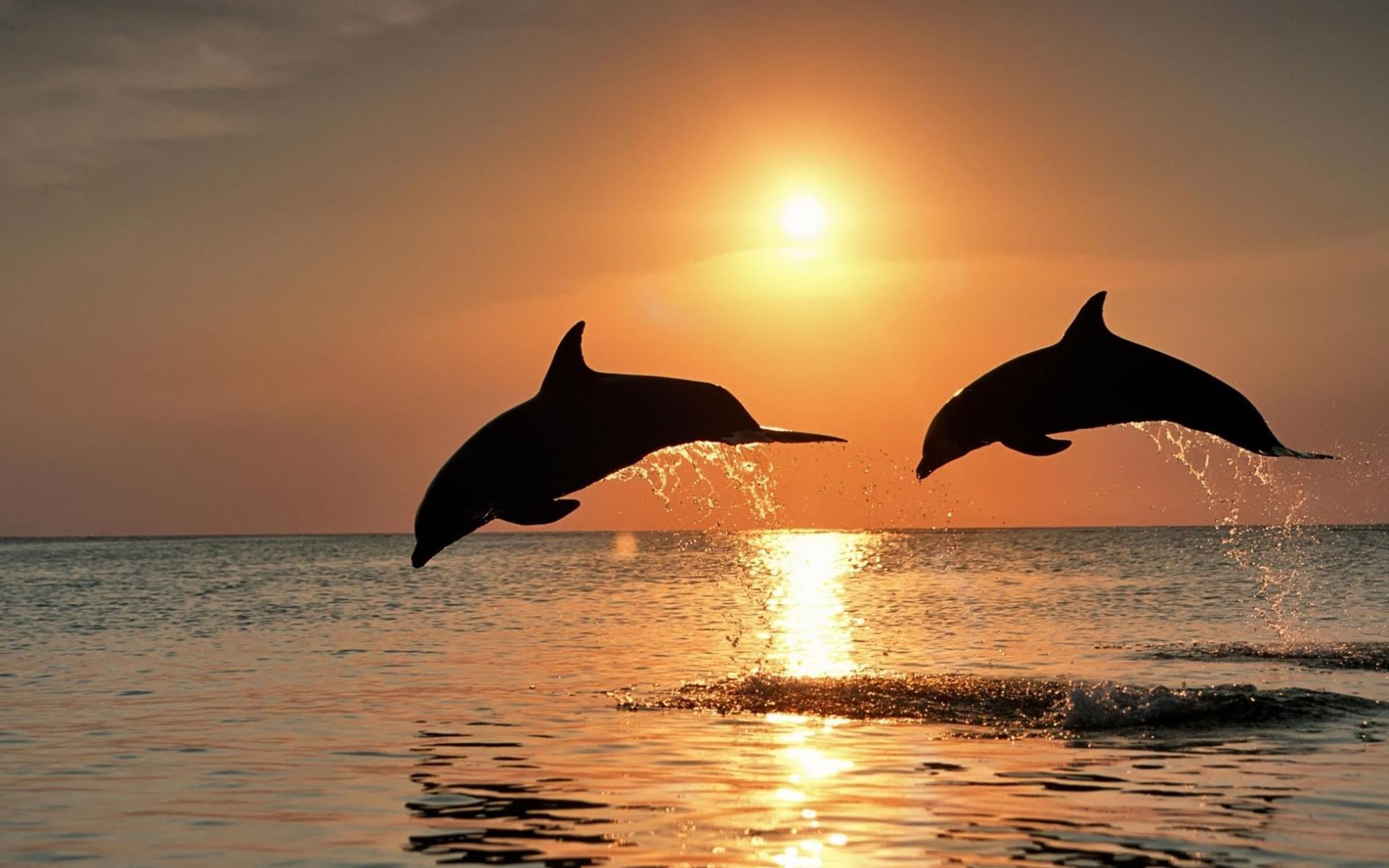 Живые обои на рабочий стол дельфины 8