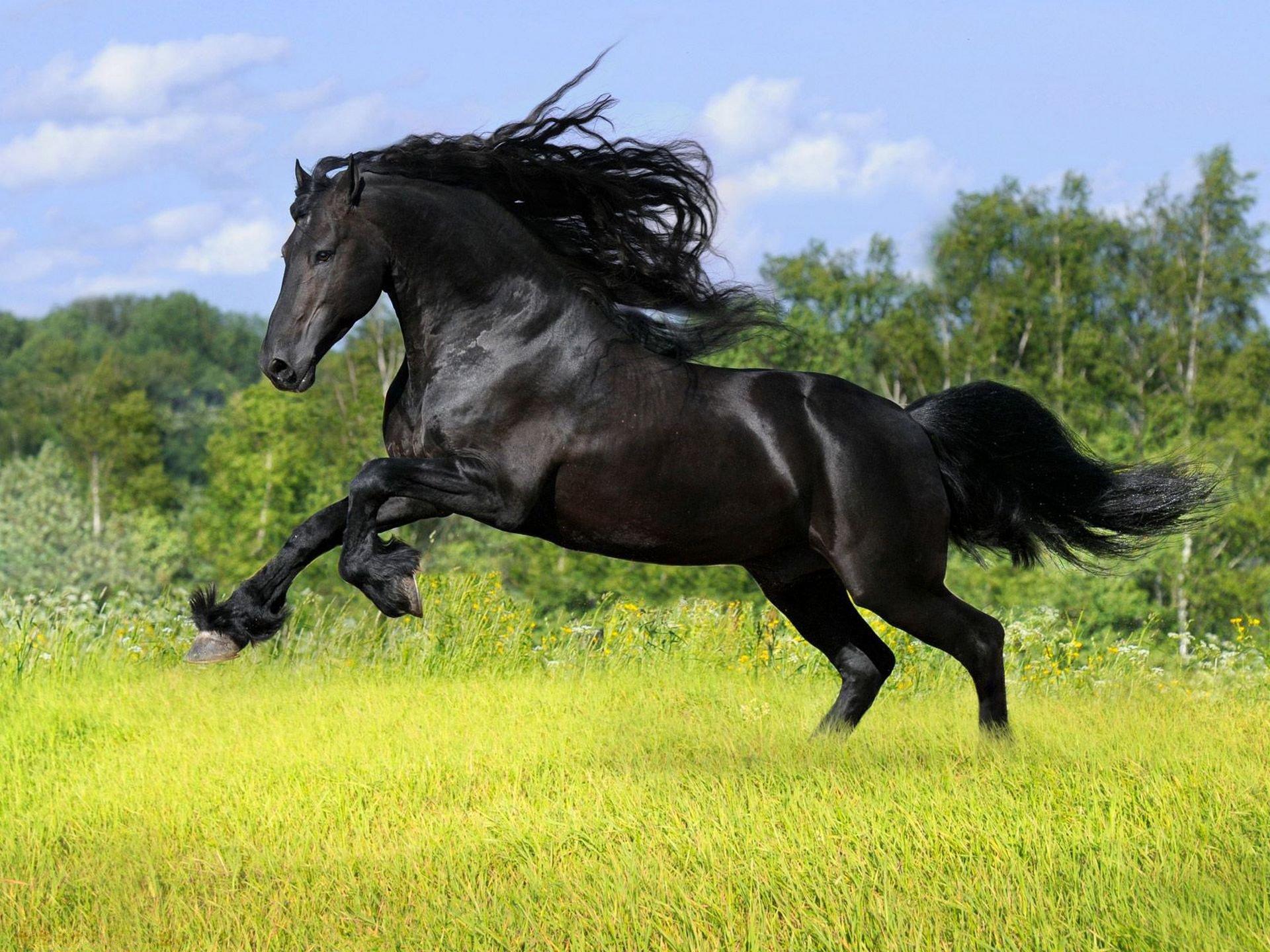 лошадь с гривой  № 3127179  скачать