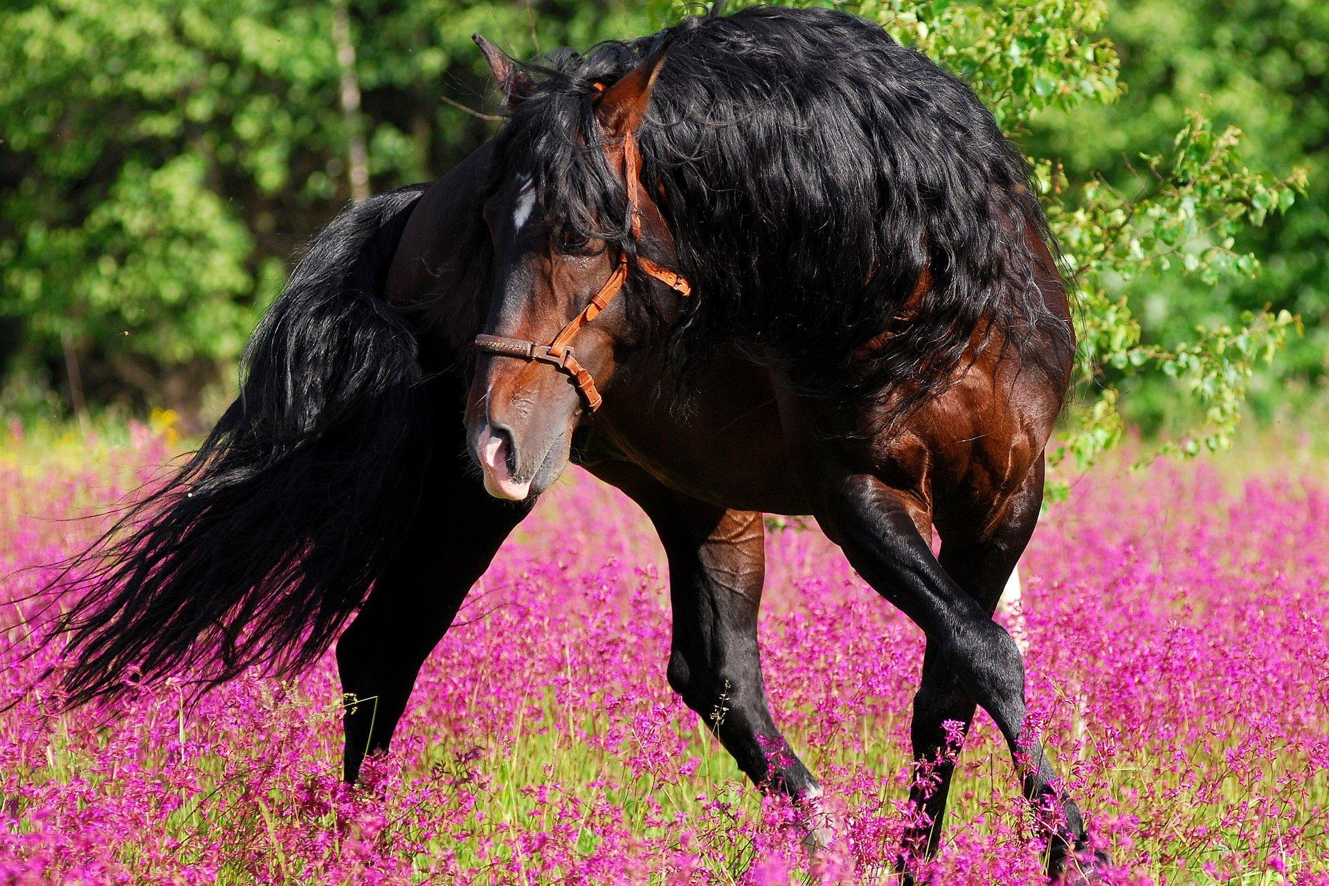 Картинки с лошадьми на компьютер