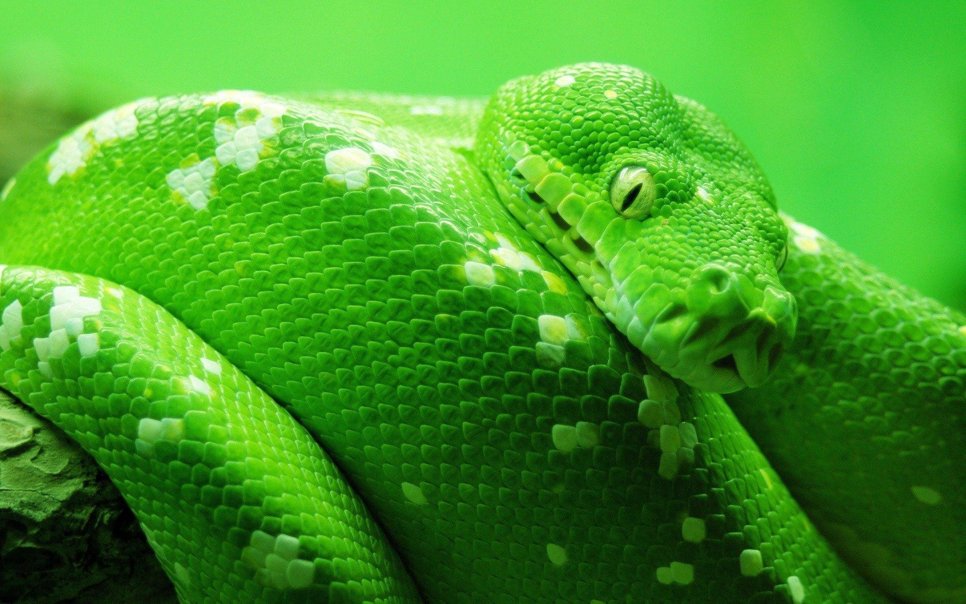 природа животные рептилия  № 234951 бесплатно