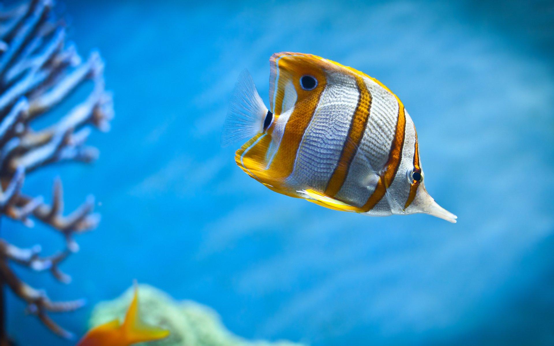 Animation wallpaper gif fish