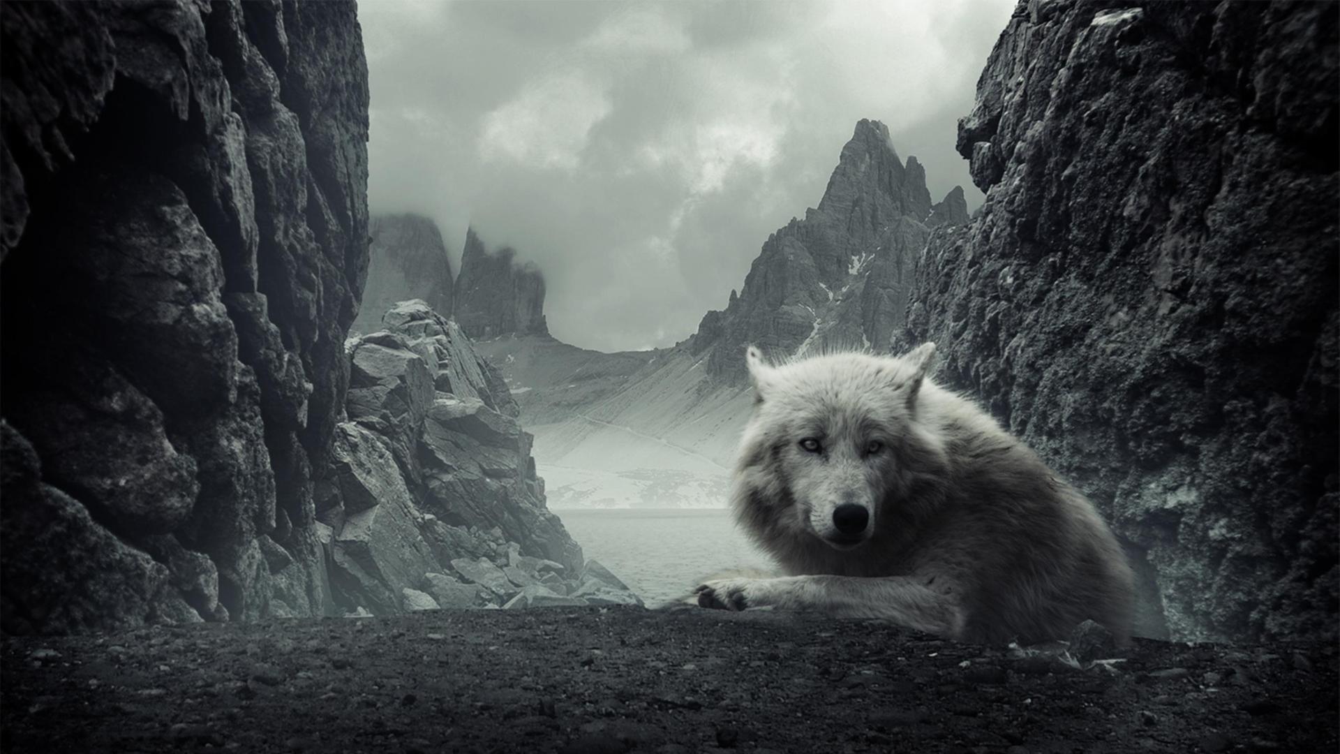 начале подбора картинки волк и горы это