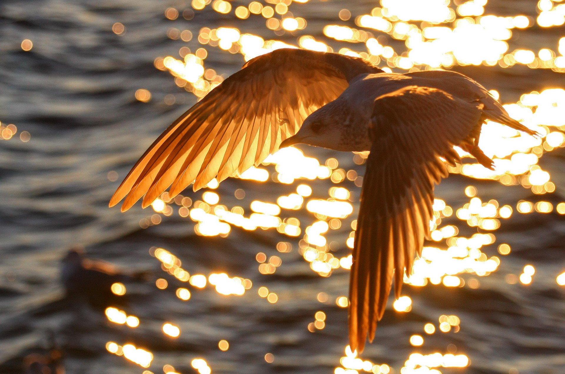Птицы зимующие в ярославле картинки с названиями них есть